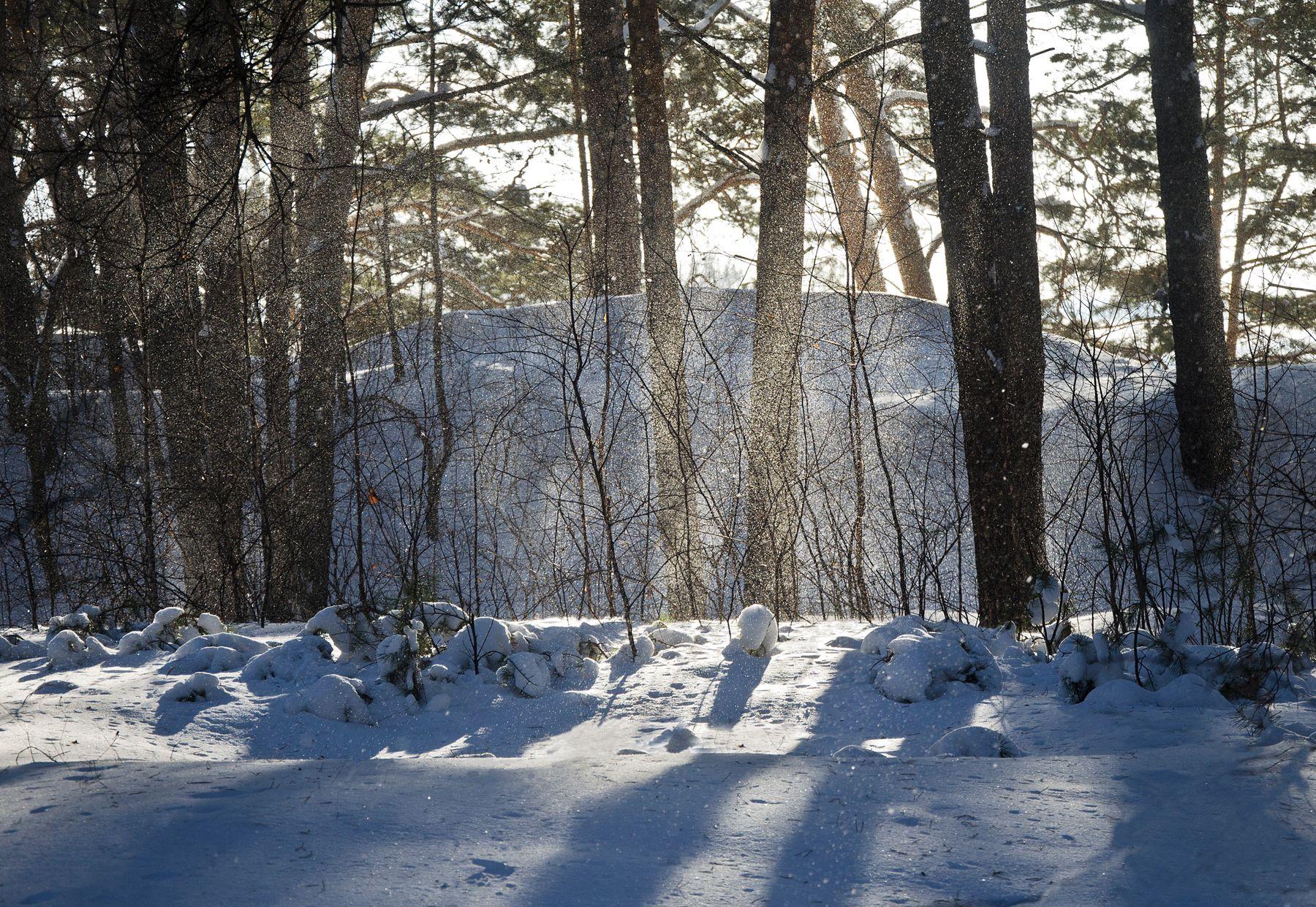 В бору заснеженном Сосны снег