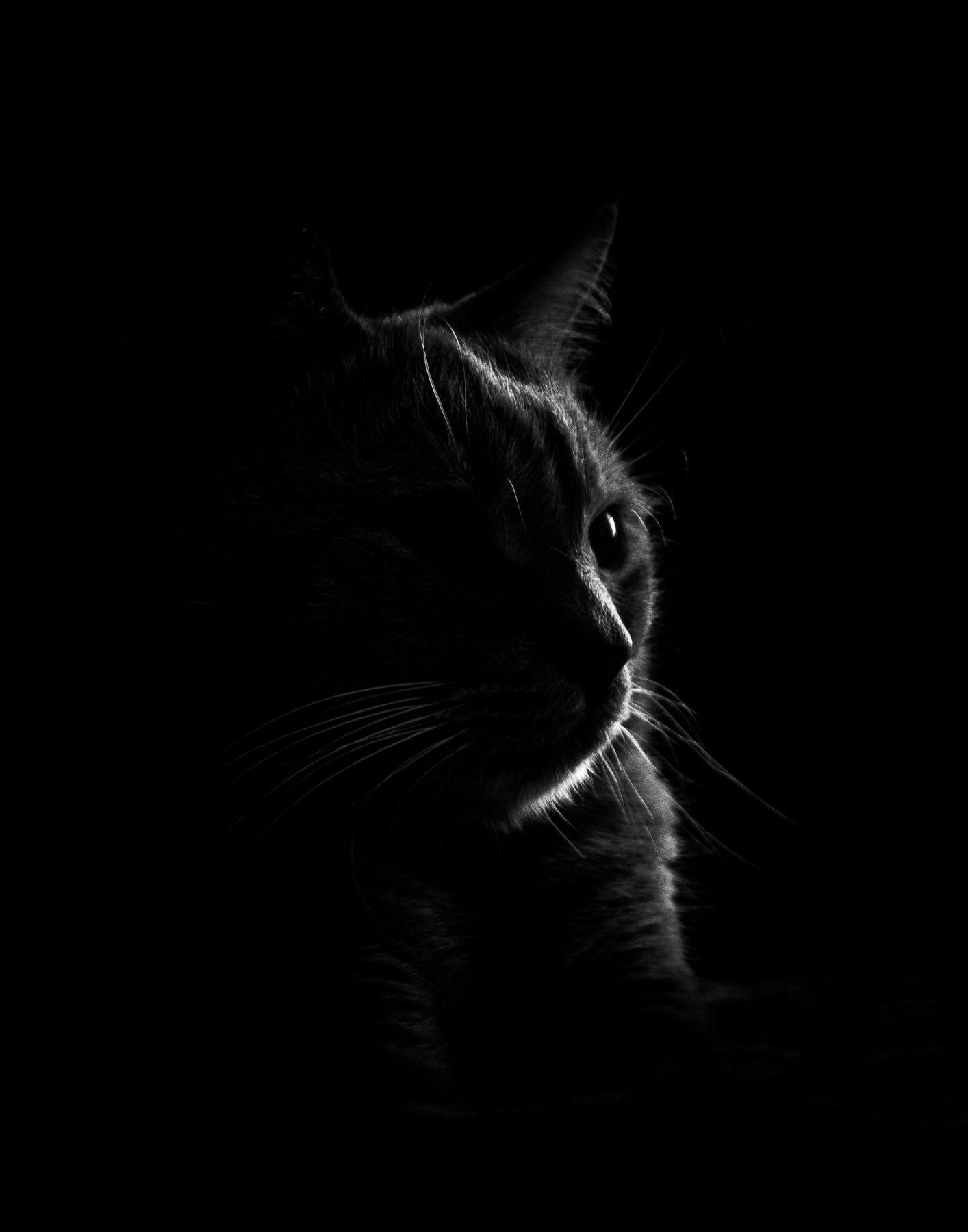 Кот Кот кошка чёрное белое тень свет