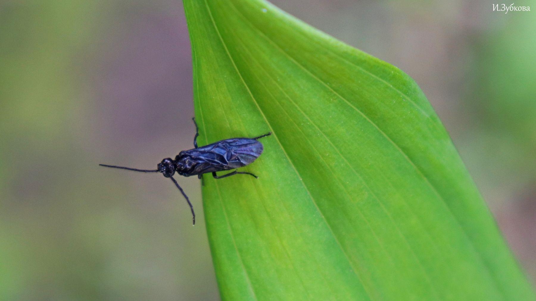 Львиная черная муха муха насекомые макро