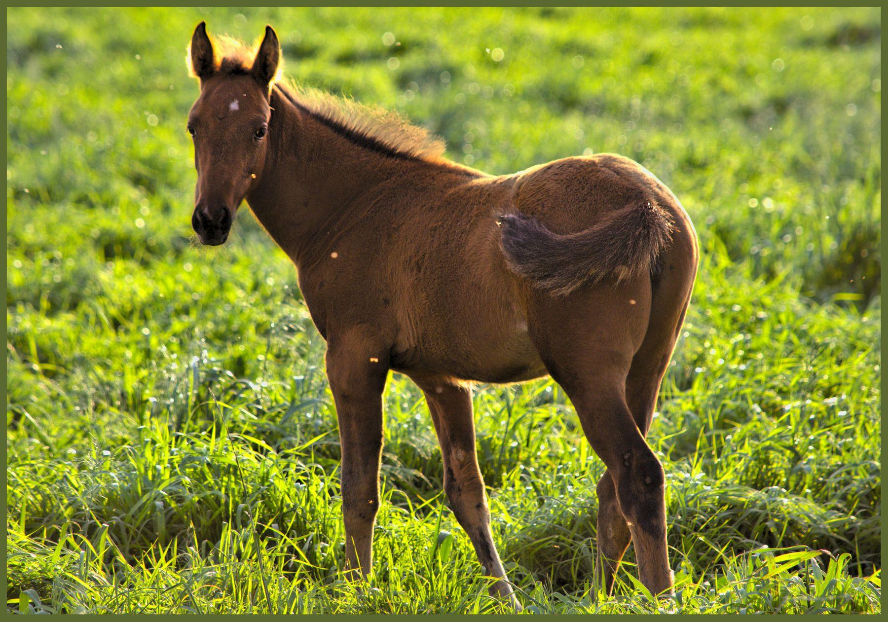 Хорошадь животные лошадь