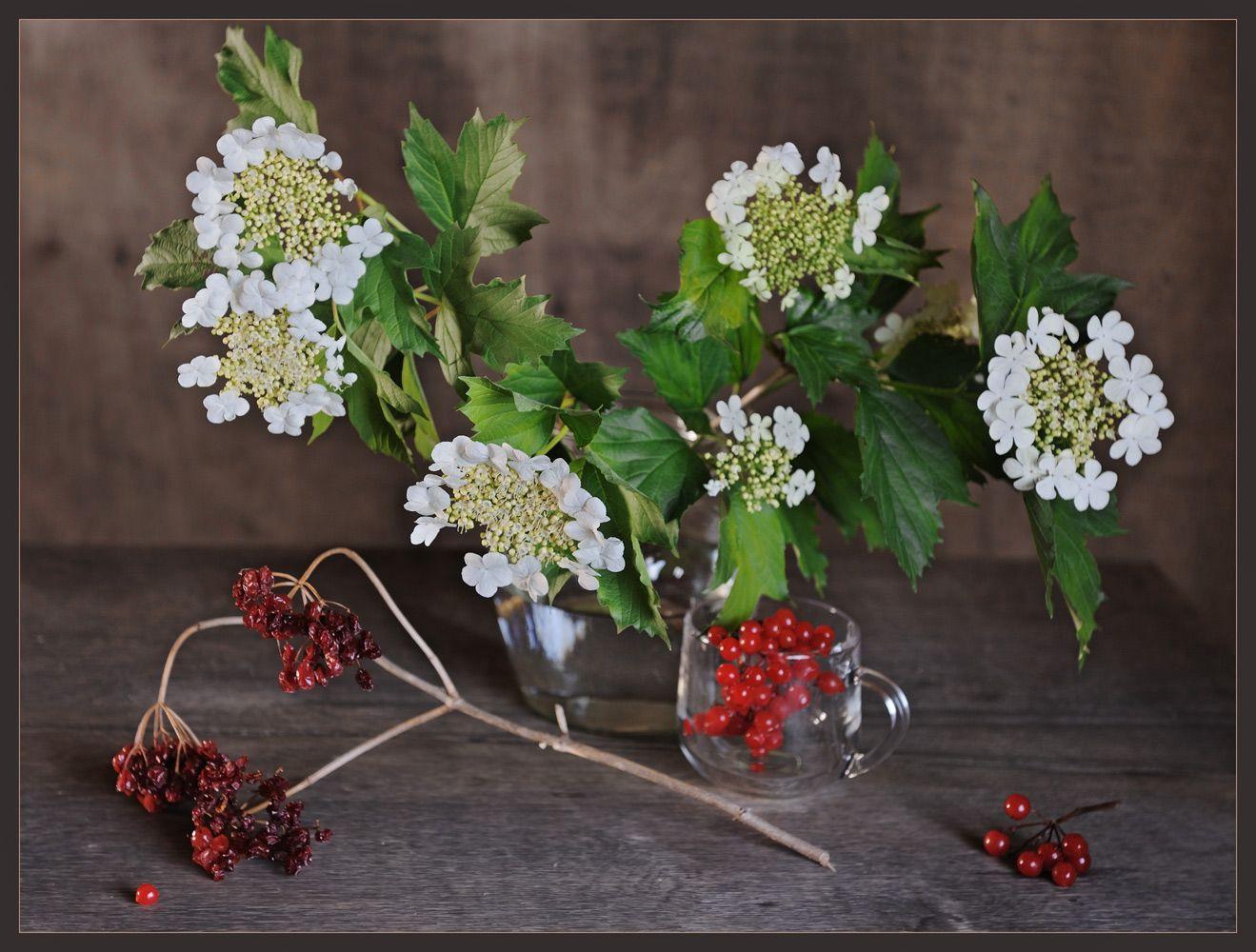 Плод и цвет