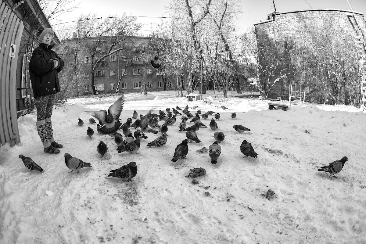голуби город Иркутск улица стрит хороший снимок