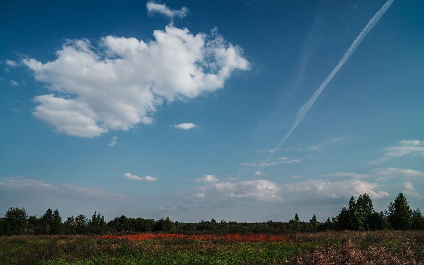 Красная трава