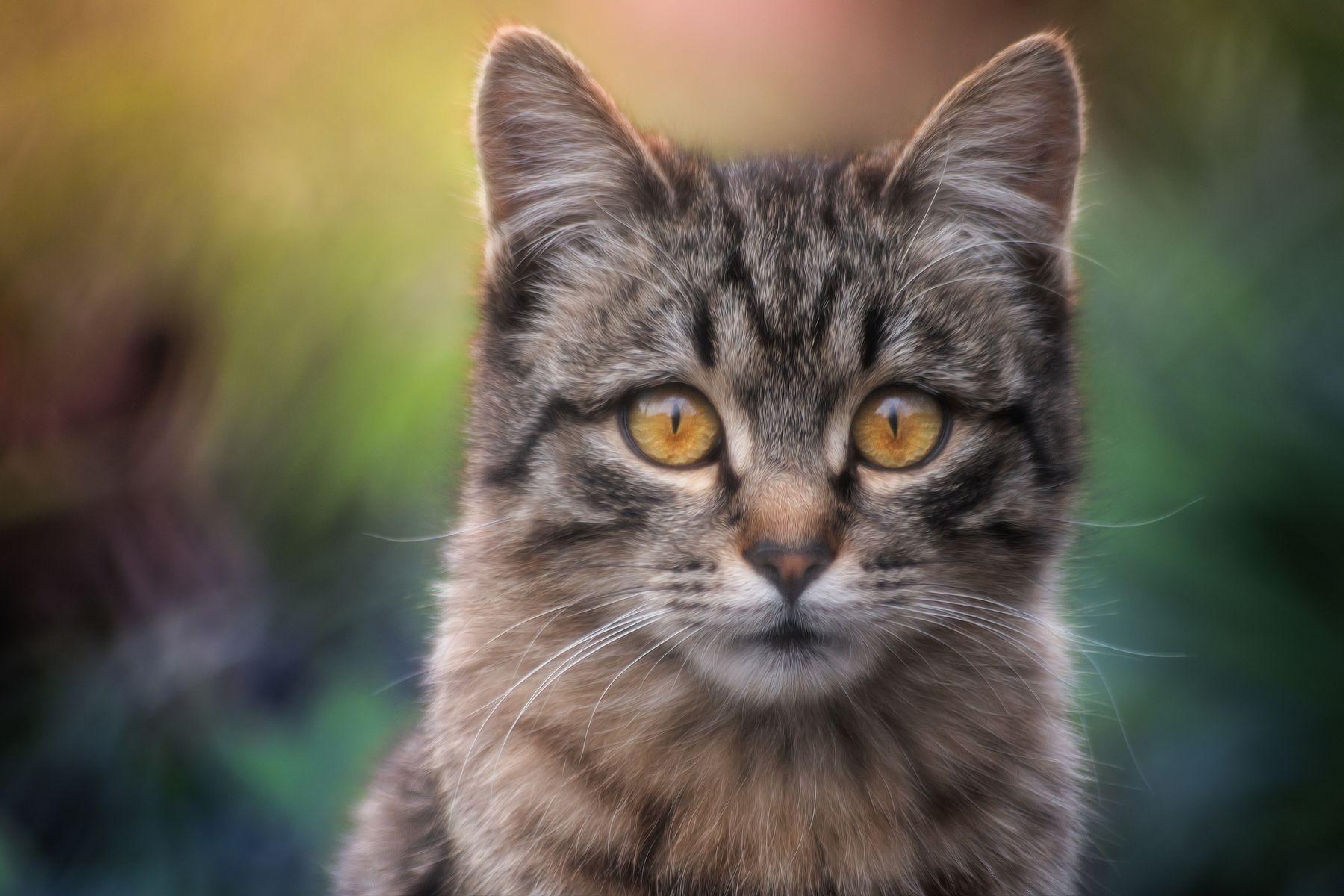 Засёк... кот глаза взгляд свет цвет портрет день животные фон боке лето