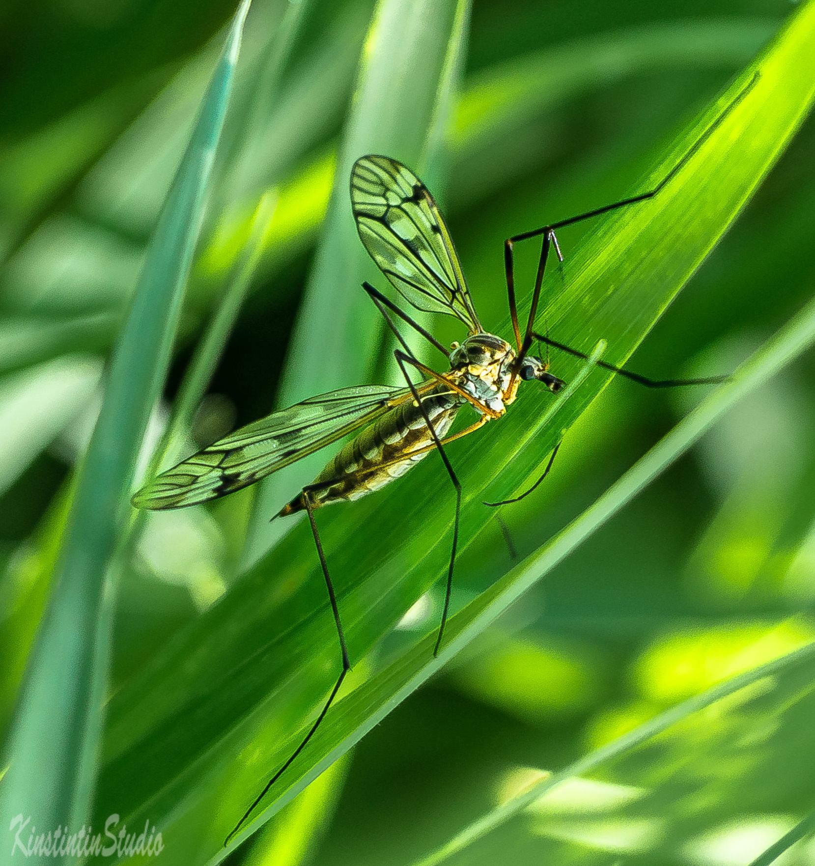 Комарище... комар лето июнь