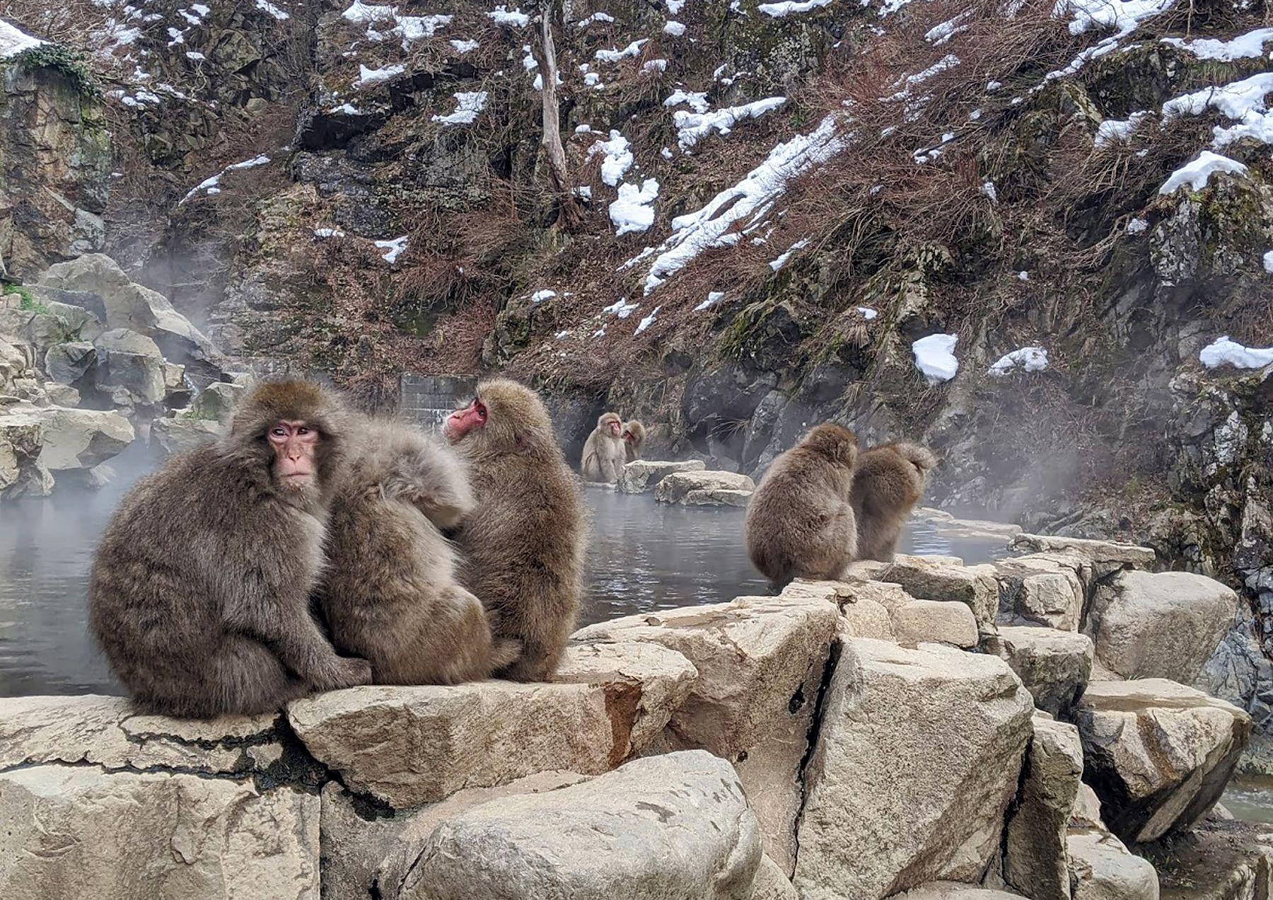 В ожидании снегопадов Дзигокудани Парк обезьян Япония