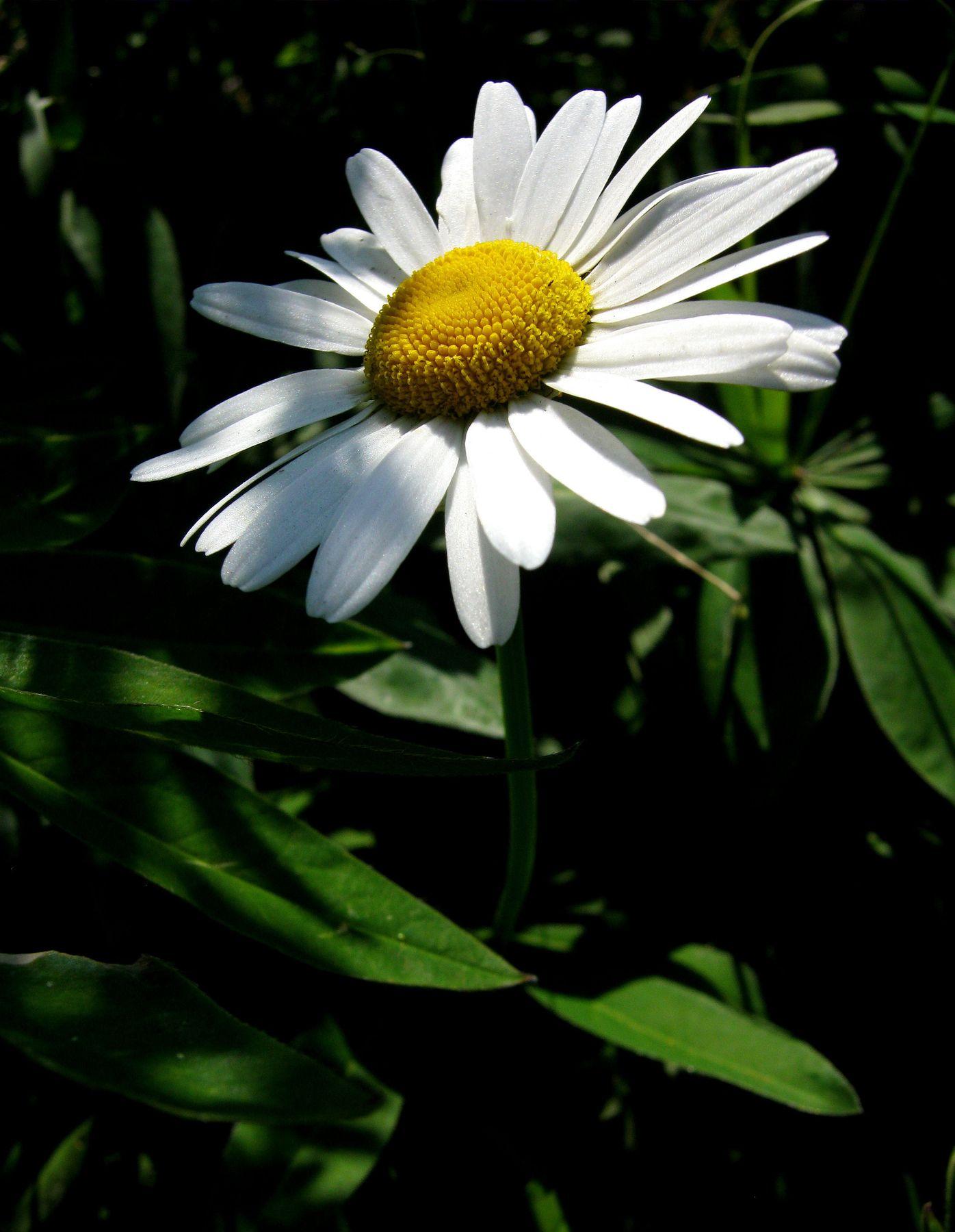 В лучах летнего солнца!!! Природа макро путешествия