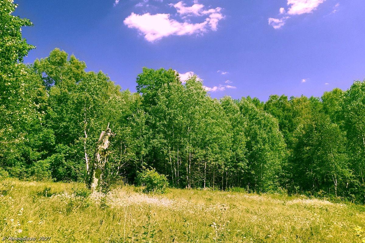 На опушке пейзаж природа лето лес опушка