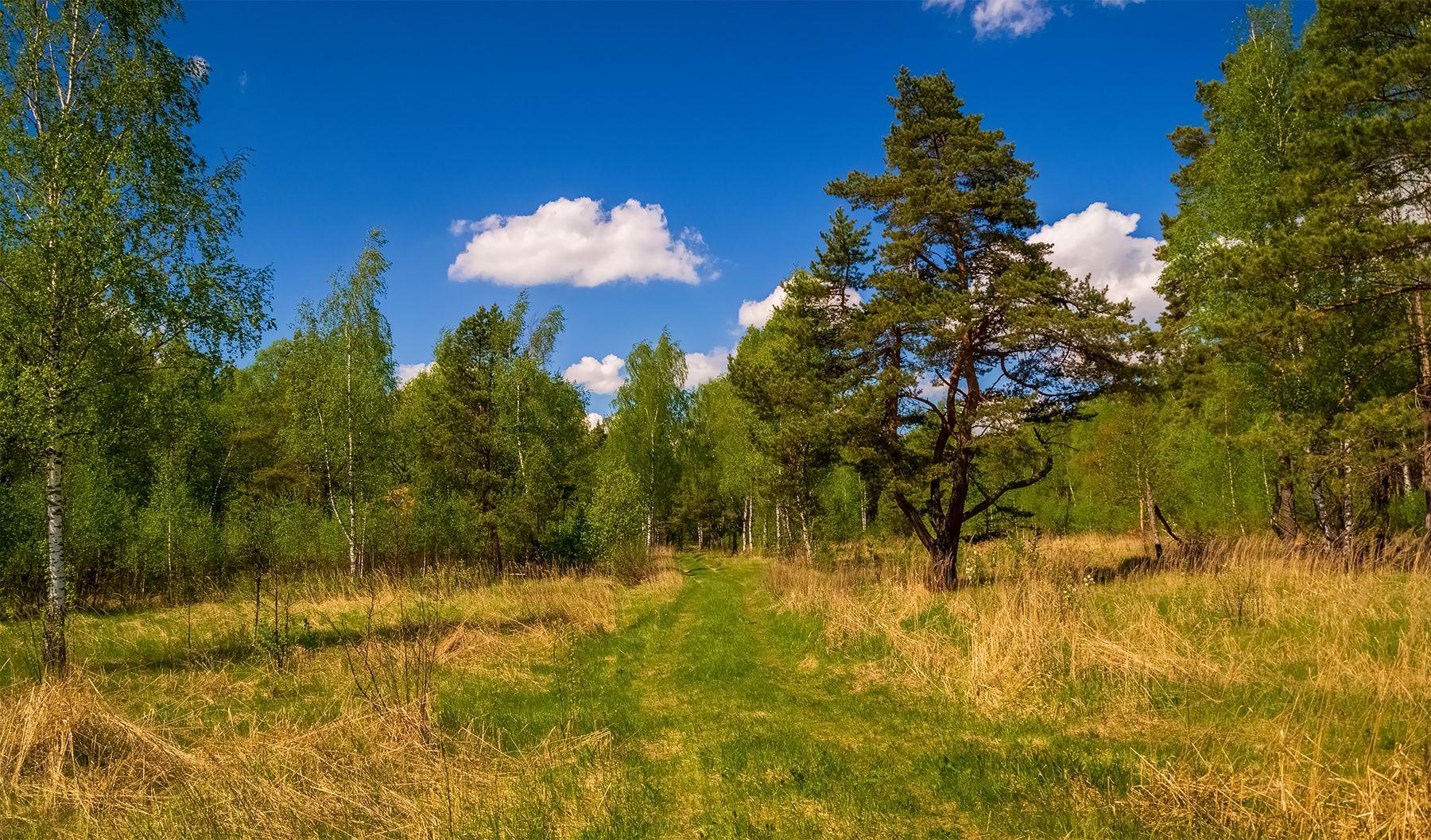 Прогулка по лесу # 02