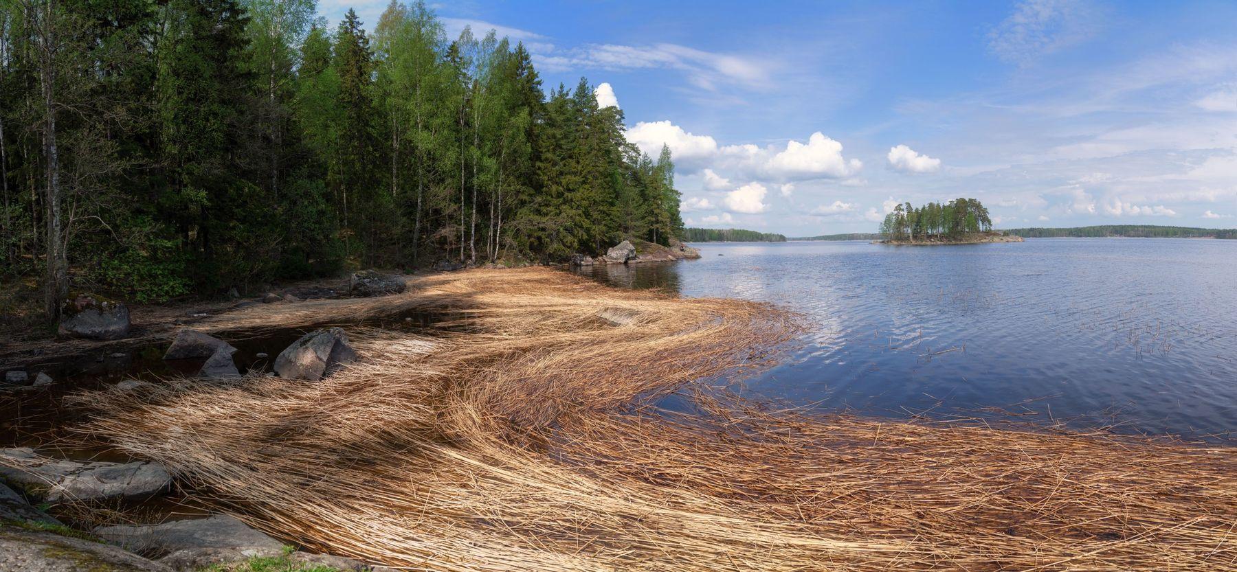 Прошлогодний тростник выборг весна монрепо природа пейзаж