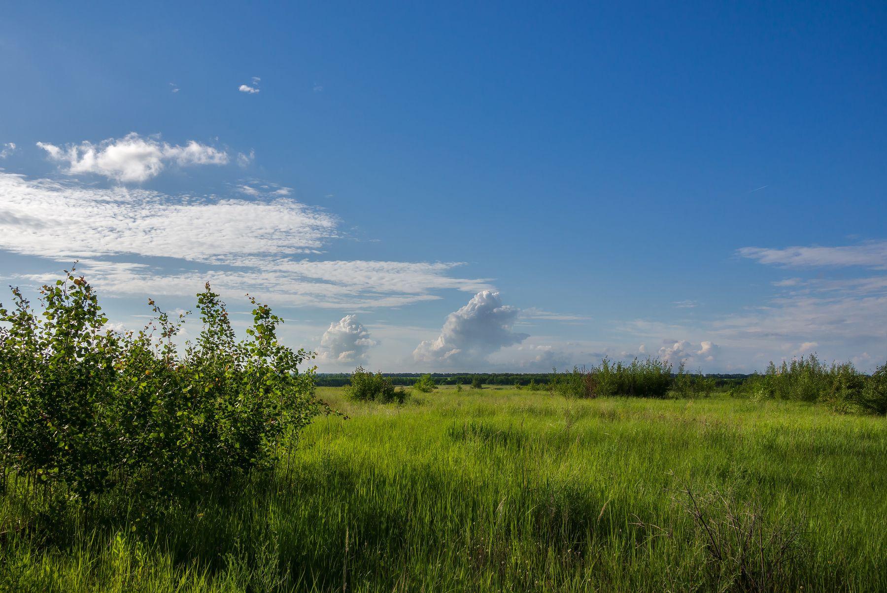 Редуты туч на горизонте пейзаж природа день лето солнце поле облака