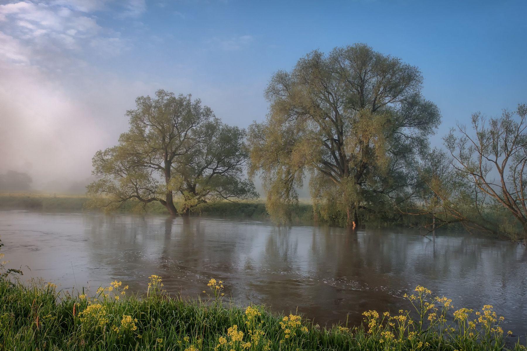 В потоке протва река наводнение утро рассвет туман деревья поток