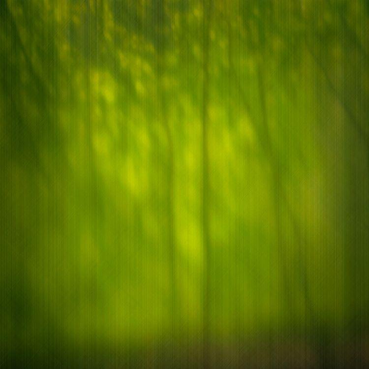 Сквозь ресницы лес лето деревья