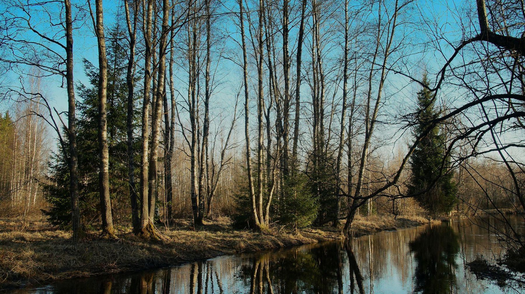 На речке Весна речка лес