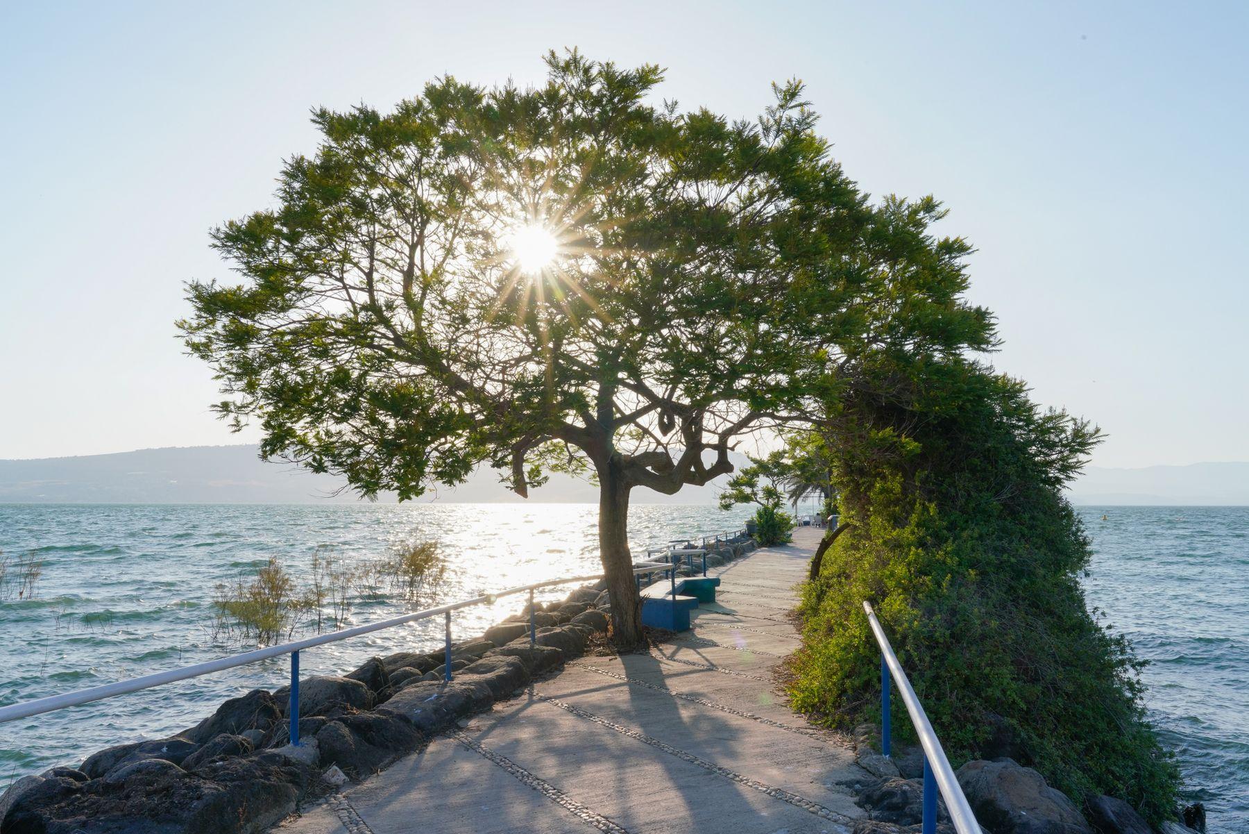 Озеро Кинерет.Израиль.
