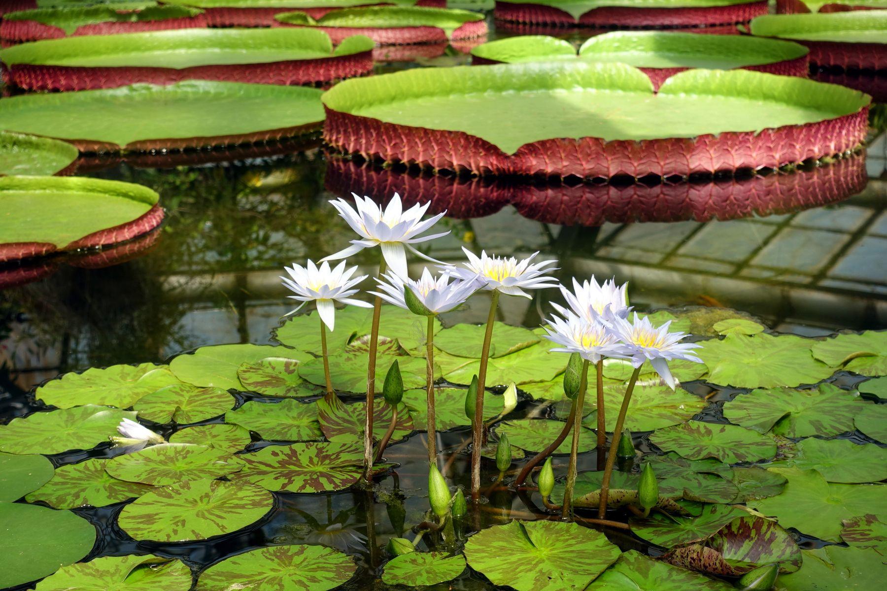 Тропики природа ботанический сад Санкт-Петербург тропики оранжерея