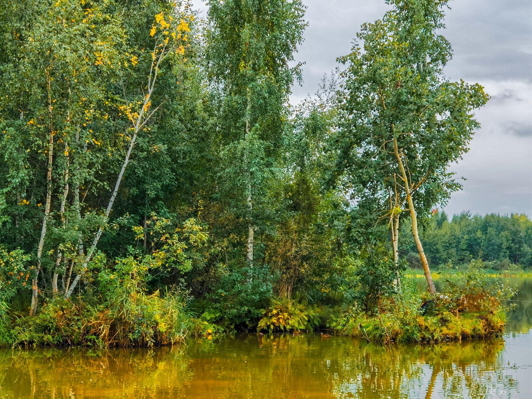 Уж осень наступила озеро березы лес рыбак удочка рыбалка берег осень папоротники