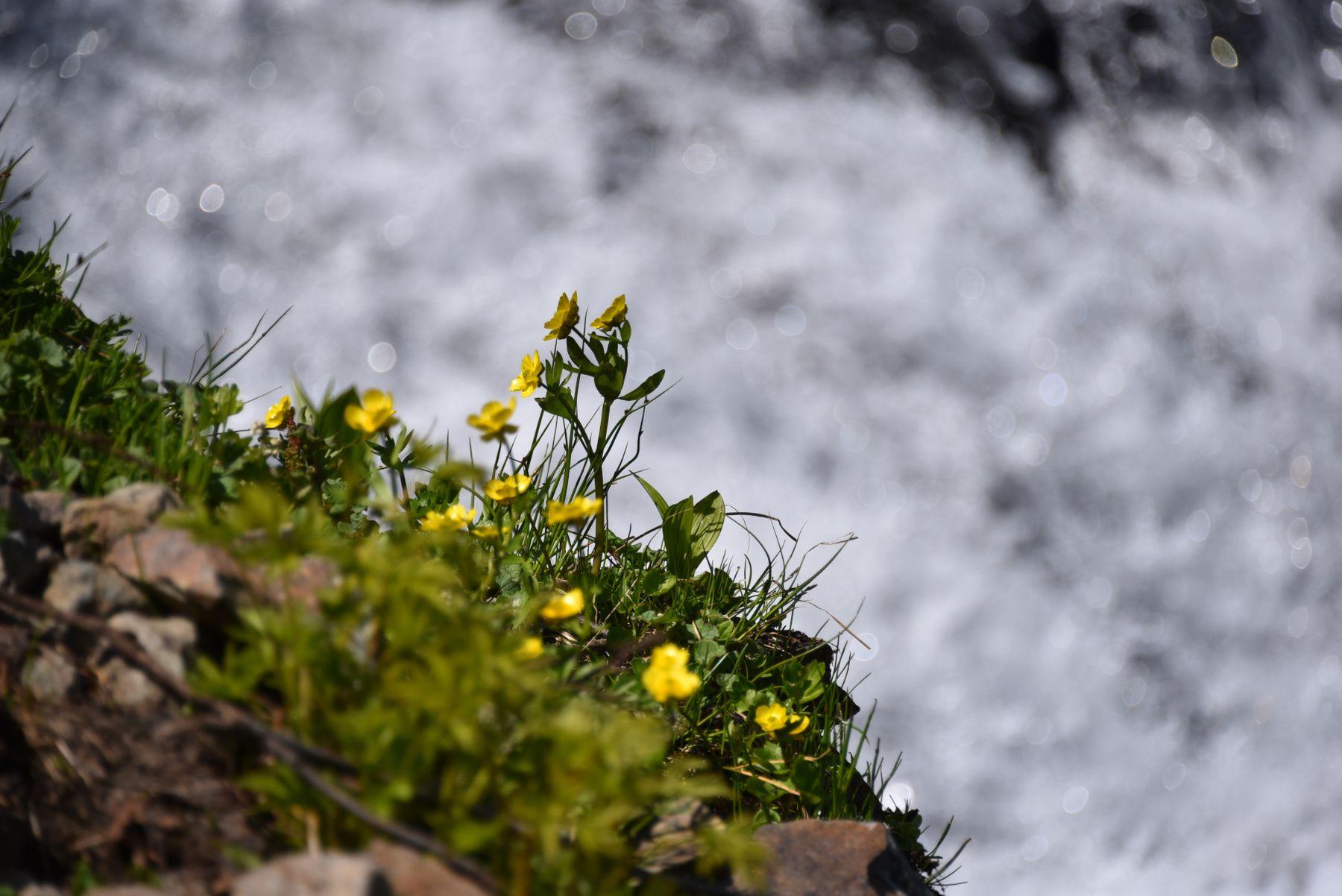 По дороге на Голубые озёра Природа Камчатка