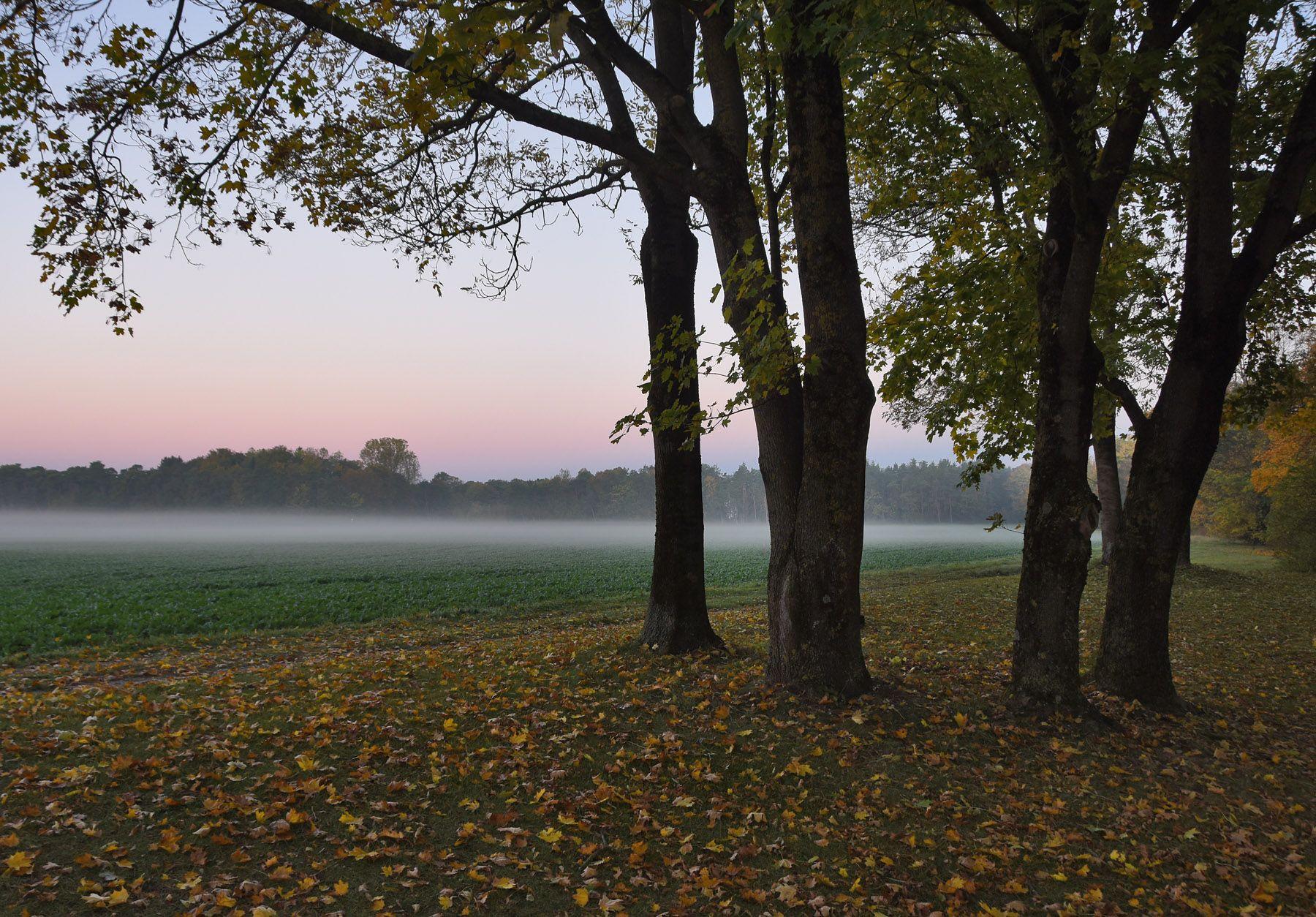 ЪЪ утро туман осень