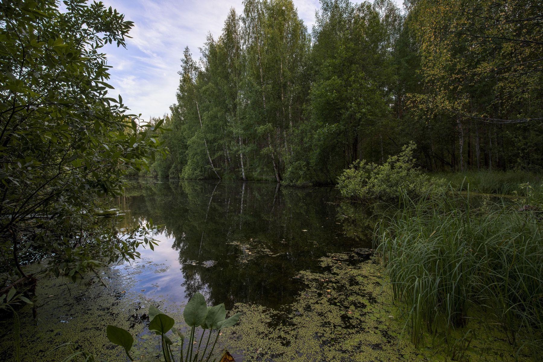 Лесное озеро Озеро Лес