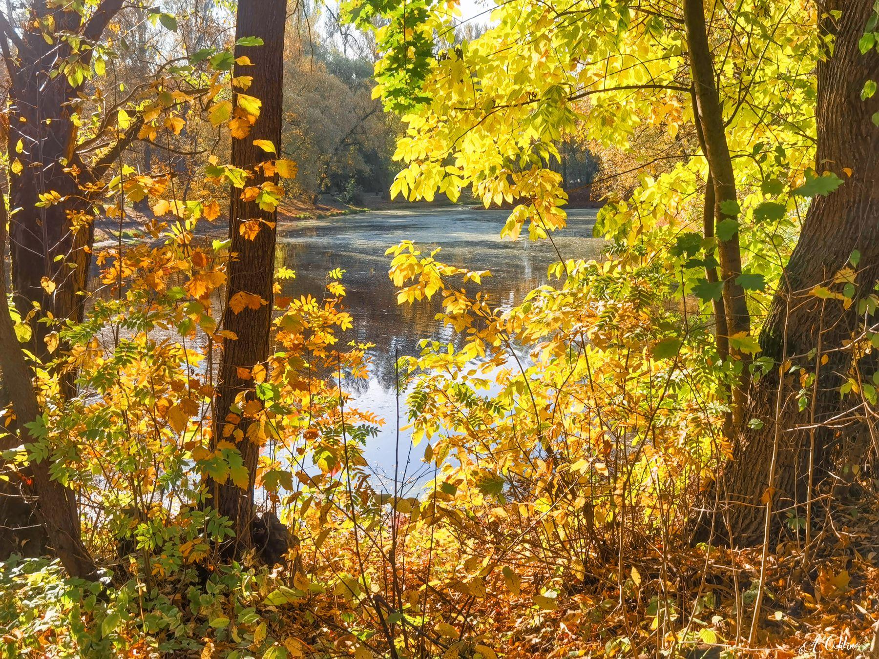 *** утро пруд осень деревья