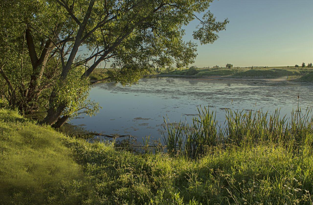 На пруду в селе Шевцово Рязанская область село Шевцово пруд вода деревья закат июнь лето