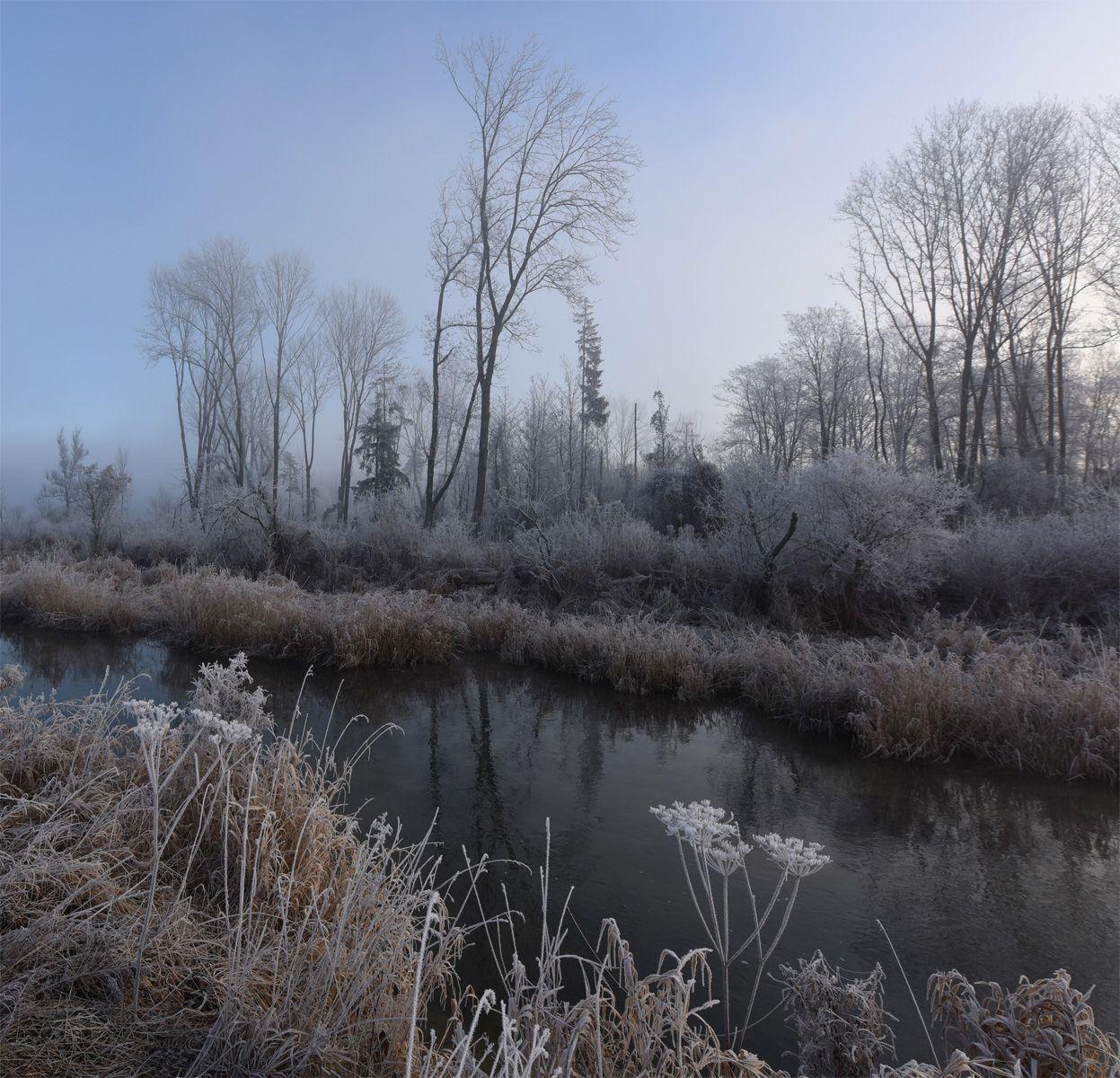 Утро на лесном ручье утро ручей туман