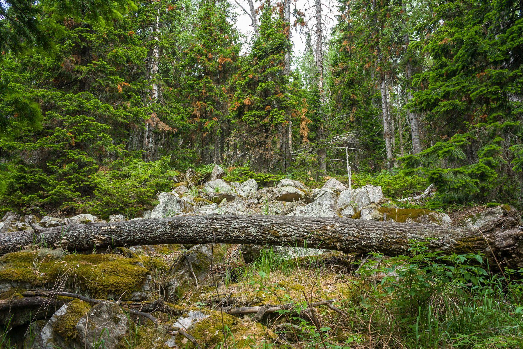 На склоне хребта Большой Уральский Южный Урал Миасс хребет Большой Уральский