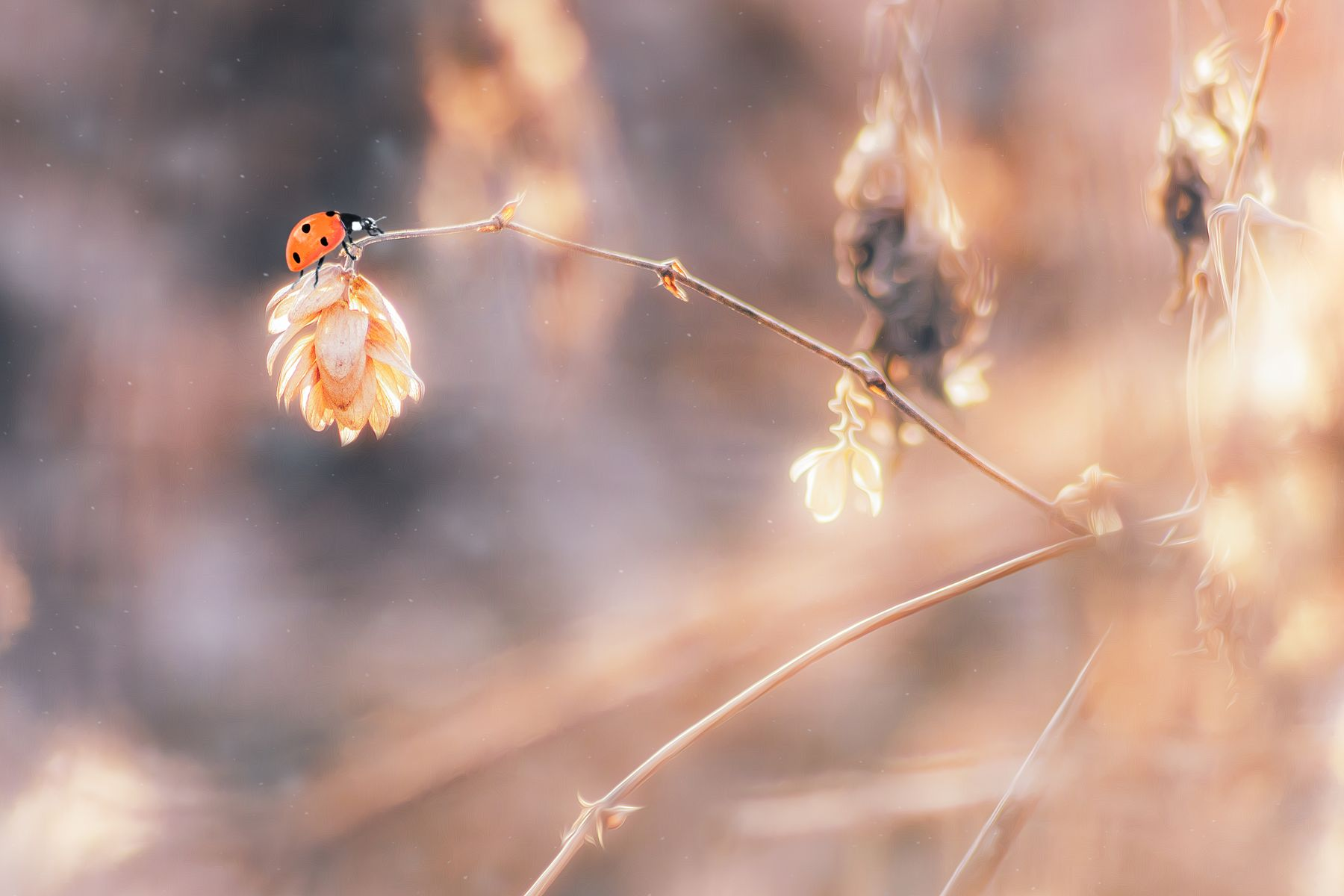 Где-то во вселенной... макро букашка трава насекомые фон боке природа осень свет цвет хмель