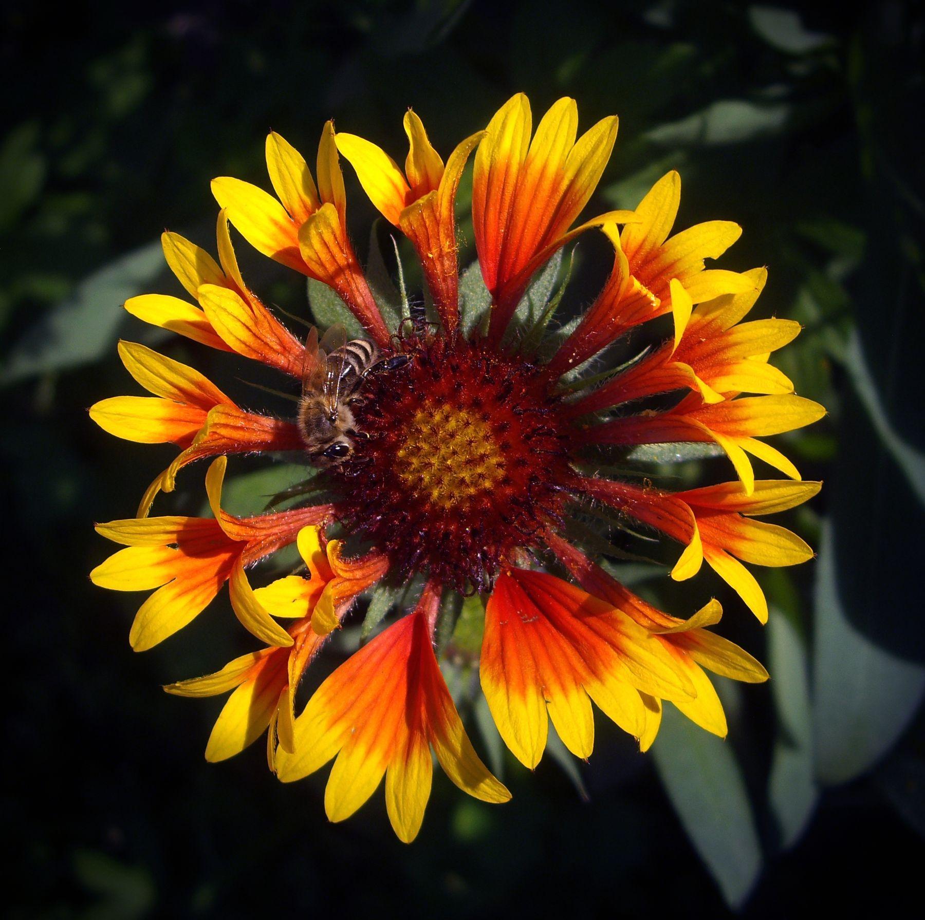 Пчела на цветке.
