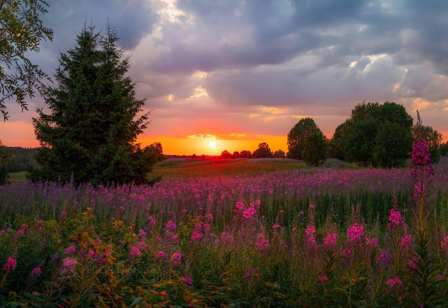 Вологодский закат Вожегодский район Вологодская область иван-чай цветение луг луговое цветы закат лето летние поляна тучи деревья
