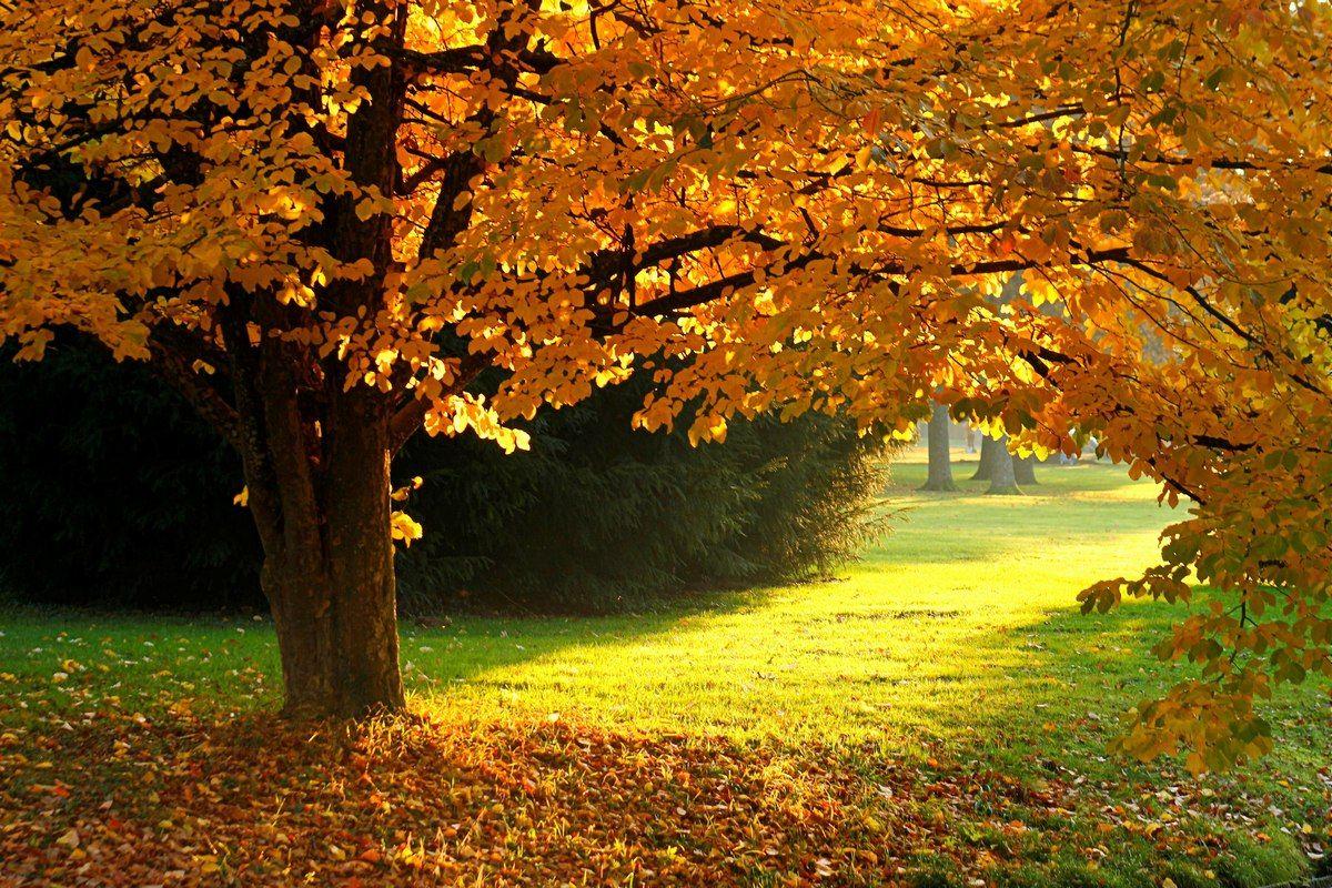 Золотая осень Осень вечер дерево