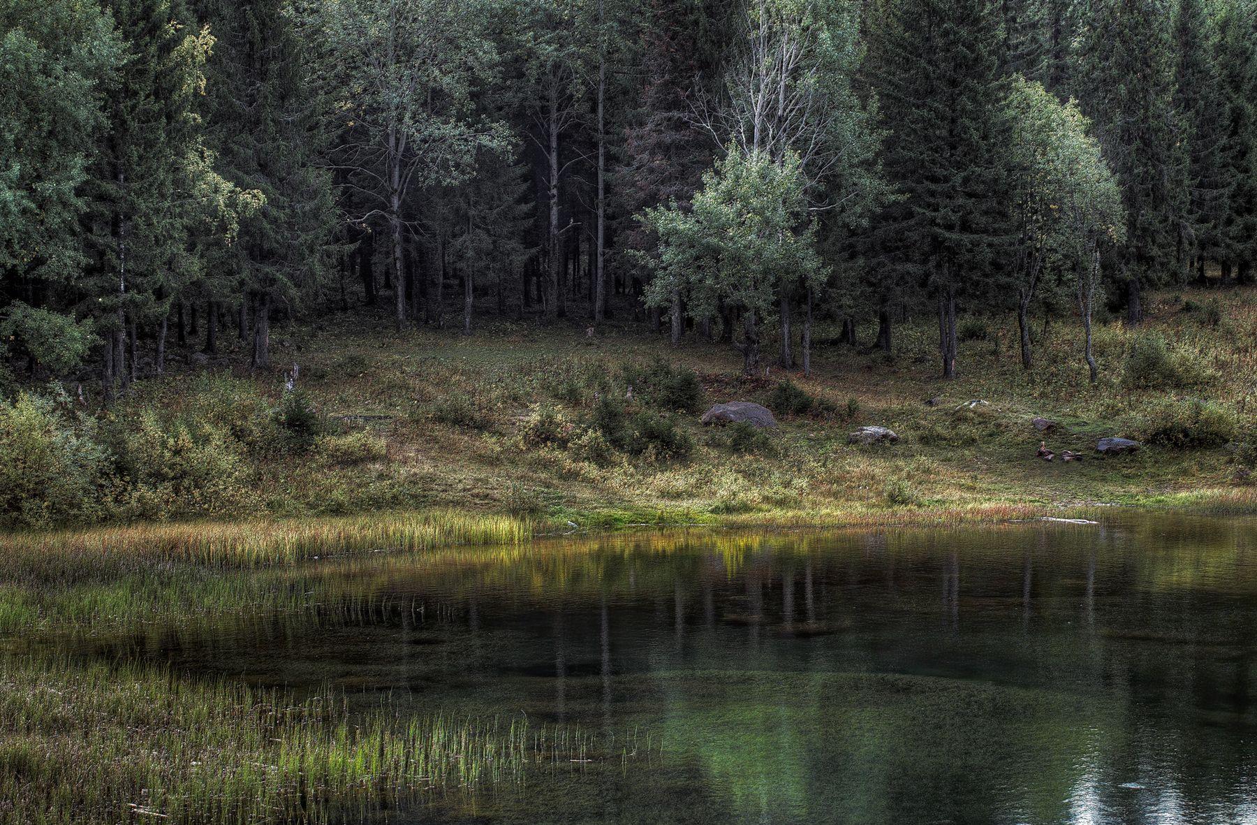 В темно-синем лесу, где трепещут осины.