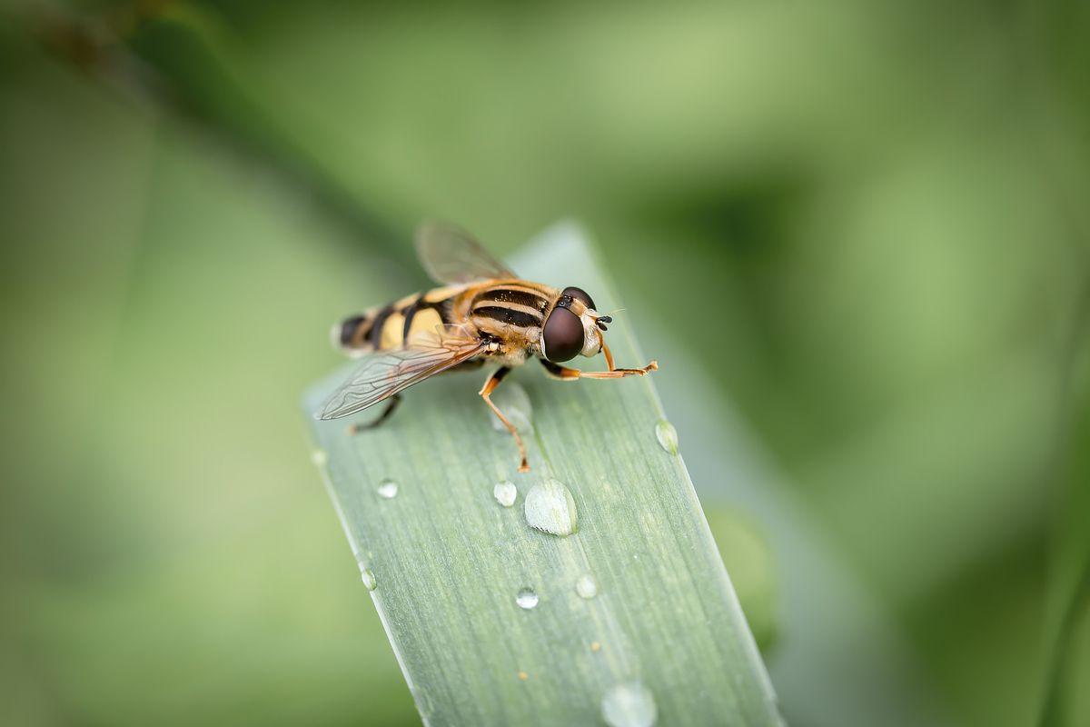 После дождя Микромир природа насекомые фауна зелёный цвет капли макро