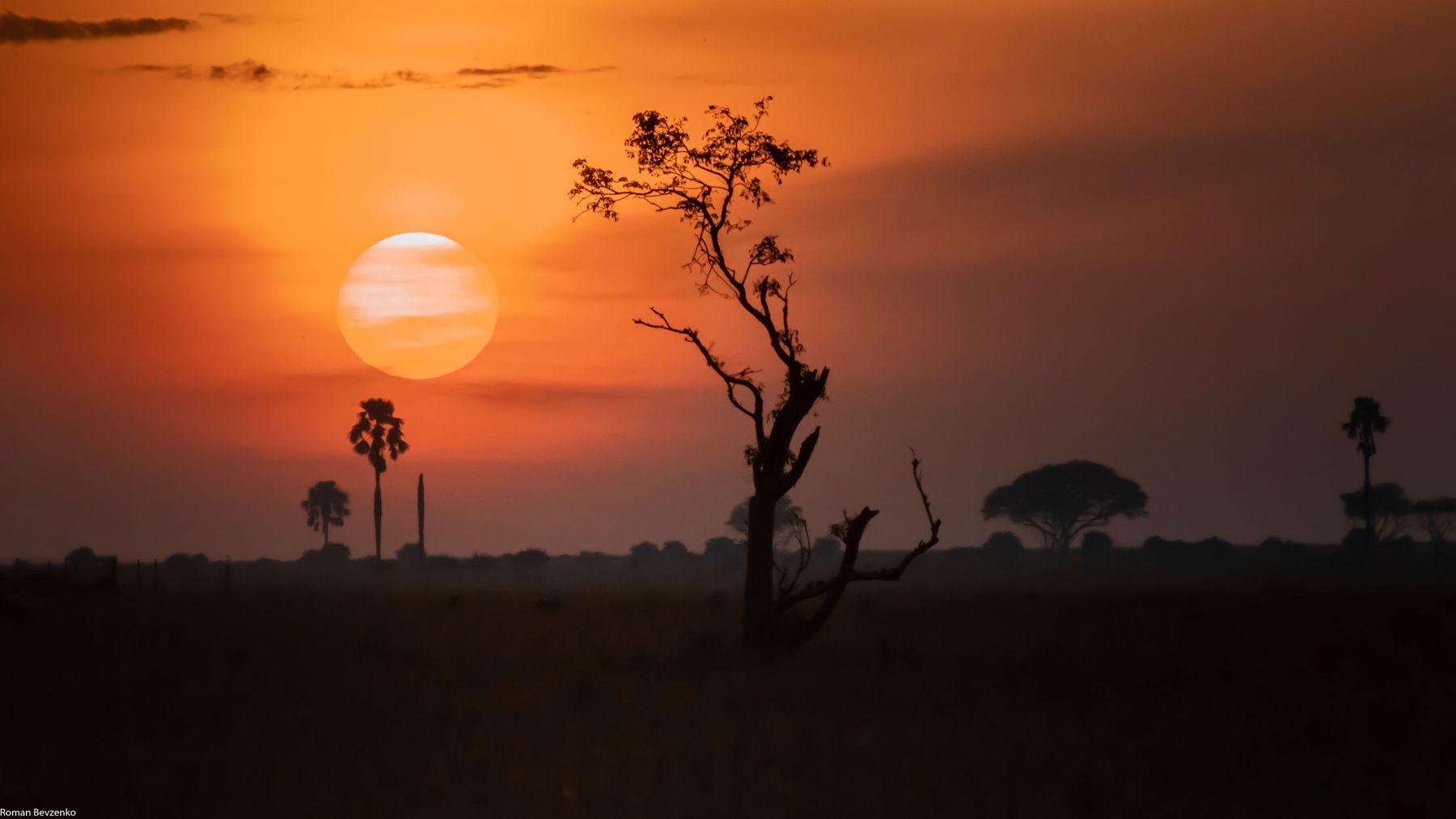 Восход солнца в саванне африка уганда сафари саванна восход солнце рассвет пейзаж