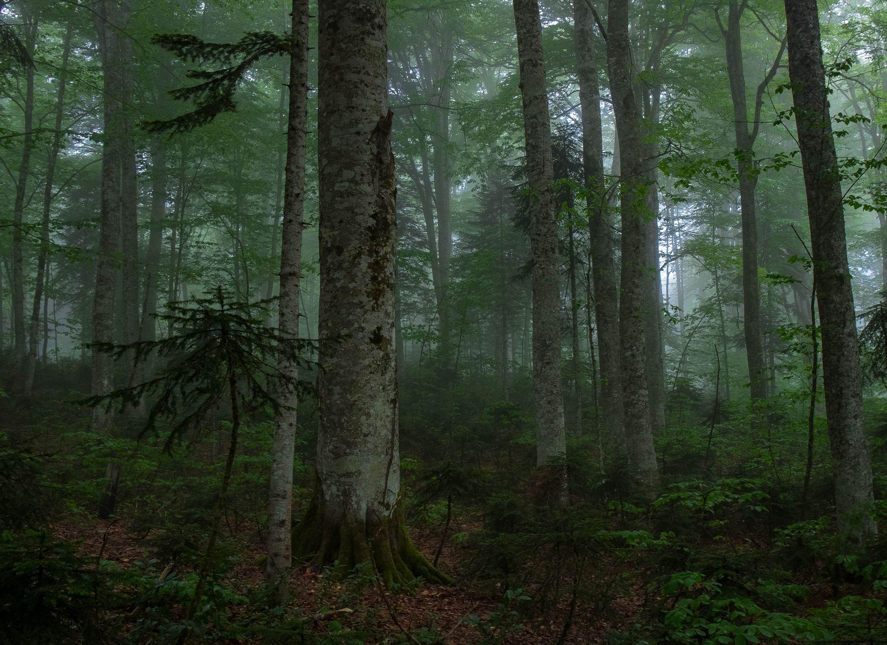 Лес и подлесок Грузия Имеретия туман