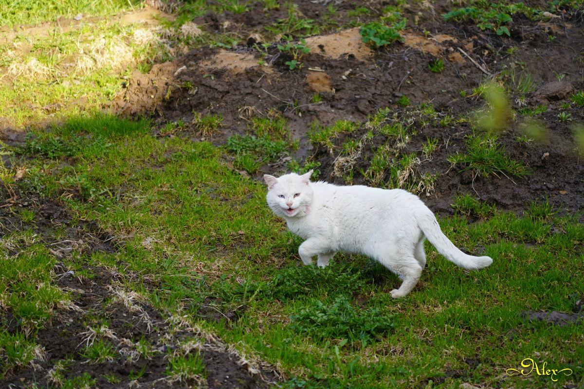 Васька кот Васька животное деревня