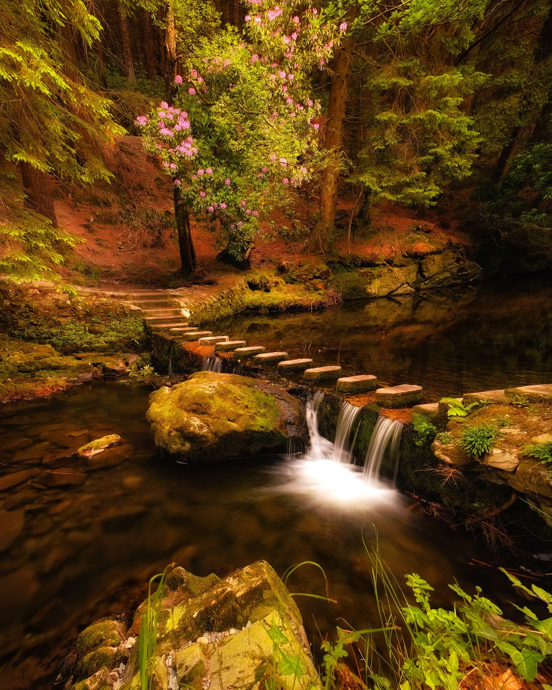 ...Fairy place... ireland ni nature outdoors landscape long exposure forest wood stream creek waterfall flow fairy tail scenic wonderful picturesque europe