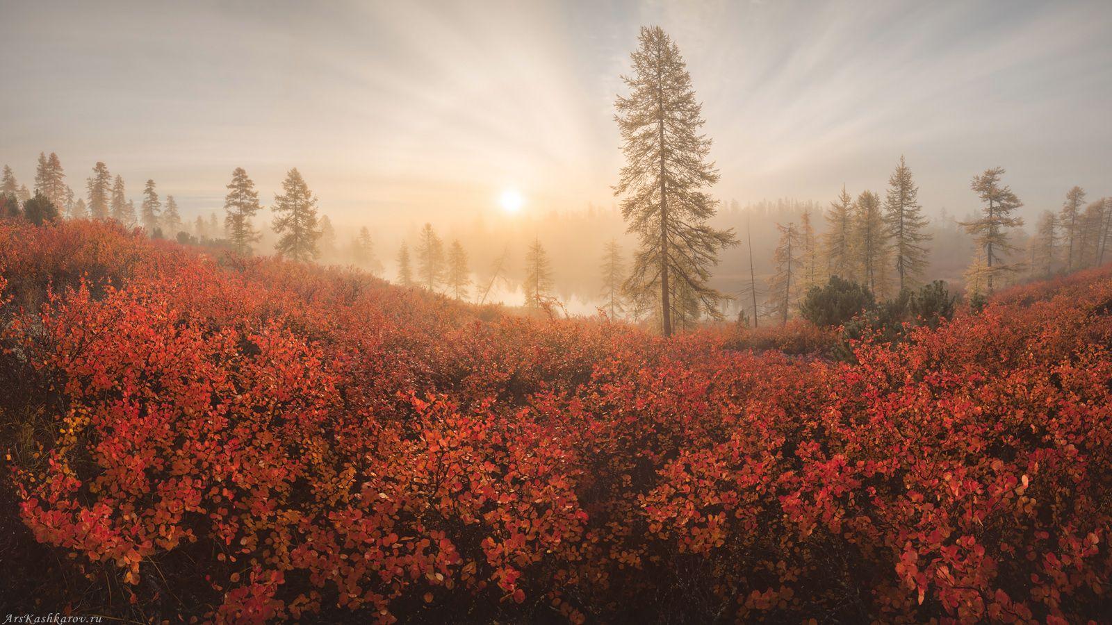 """""""Чудеса осенней Колымы"""" Колыма озеро Джека Лондона Магаданская область Дальний Восток Стоозерка осень краски осени туман"""