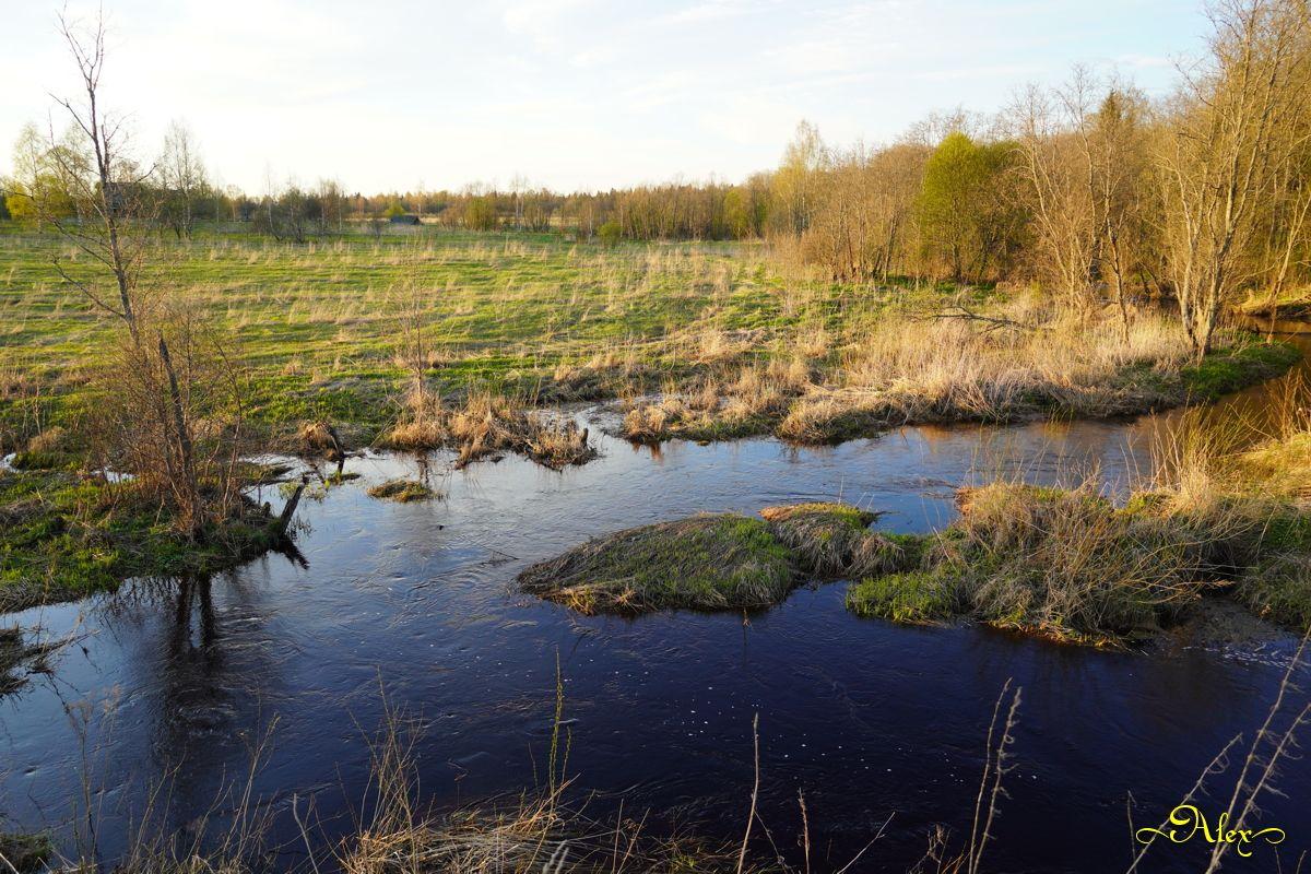Лесная речка речка весна природа пейзаж разлив