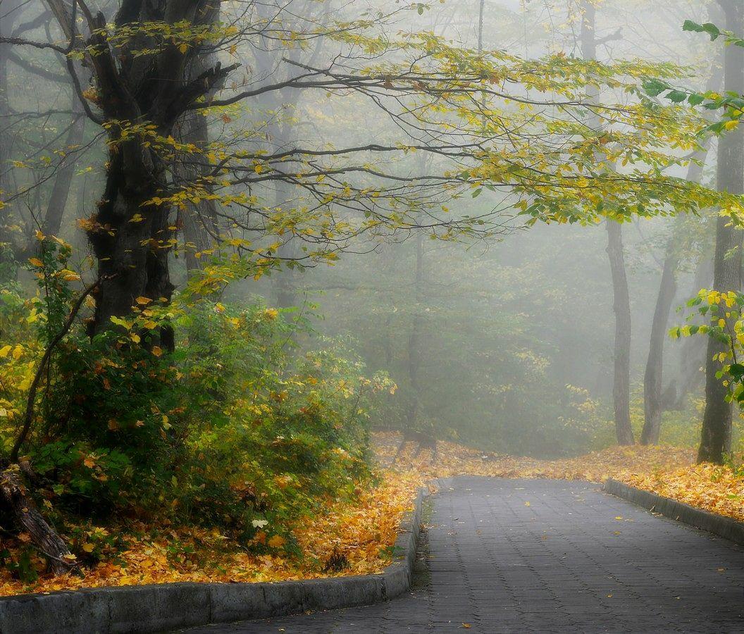 В осеннем парке........