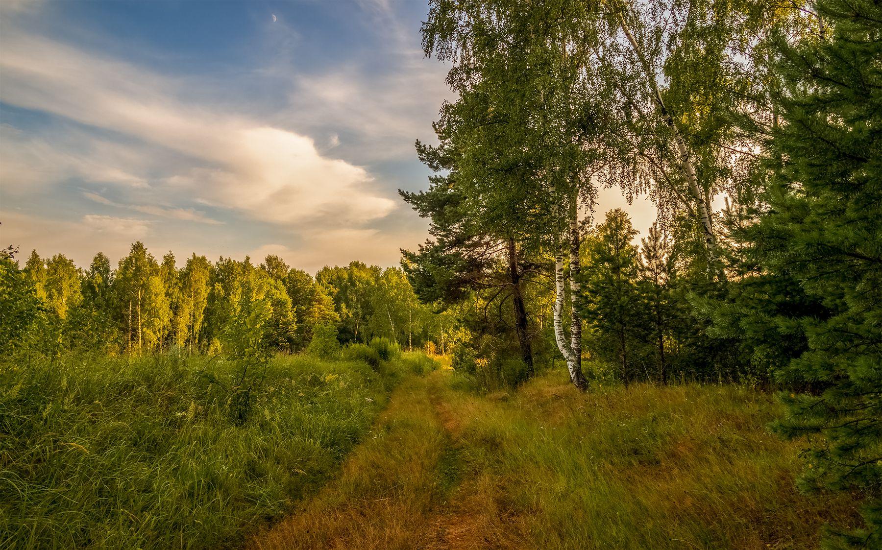 На закате дня в лесу.# 03