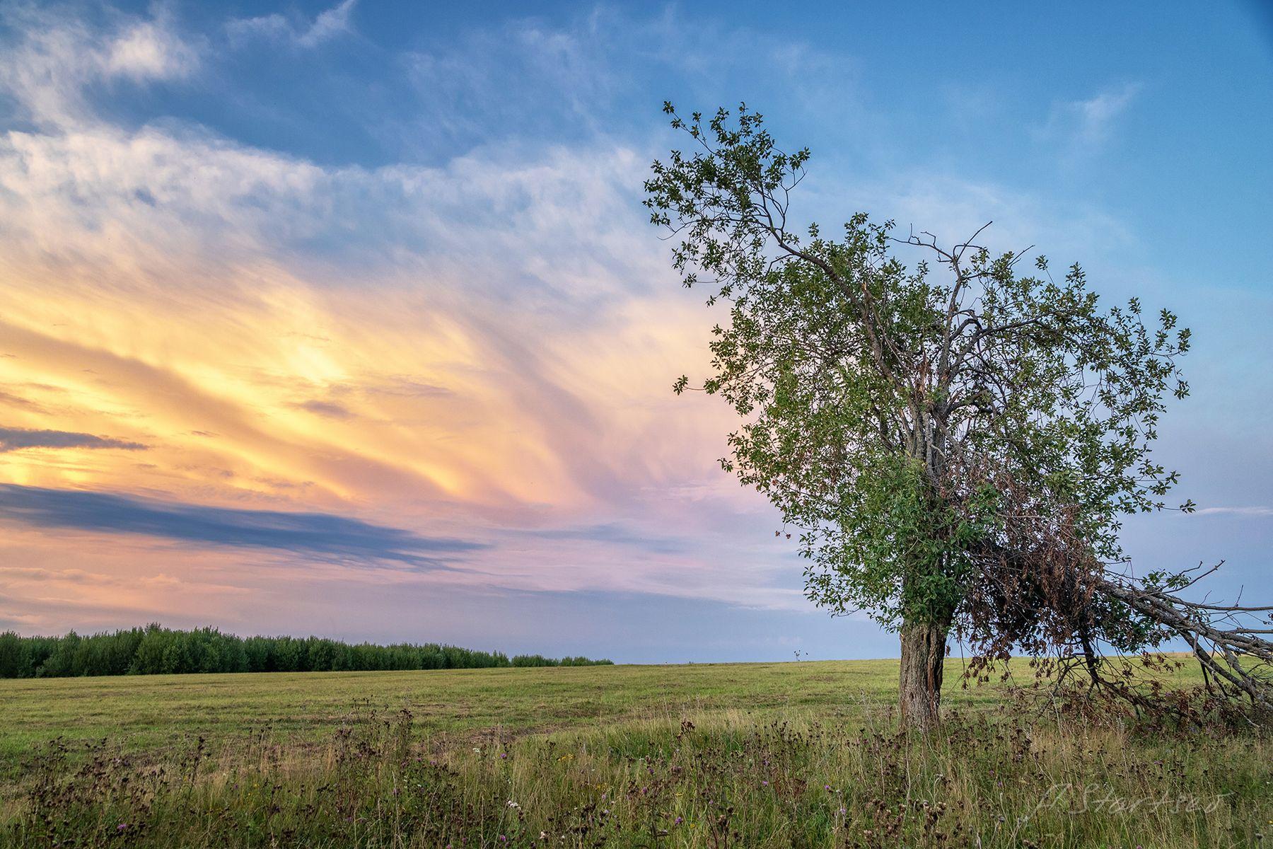 Сломанное дерево дерево лето пейзаж природа небо Пермский_край вечер закат