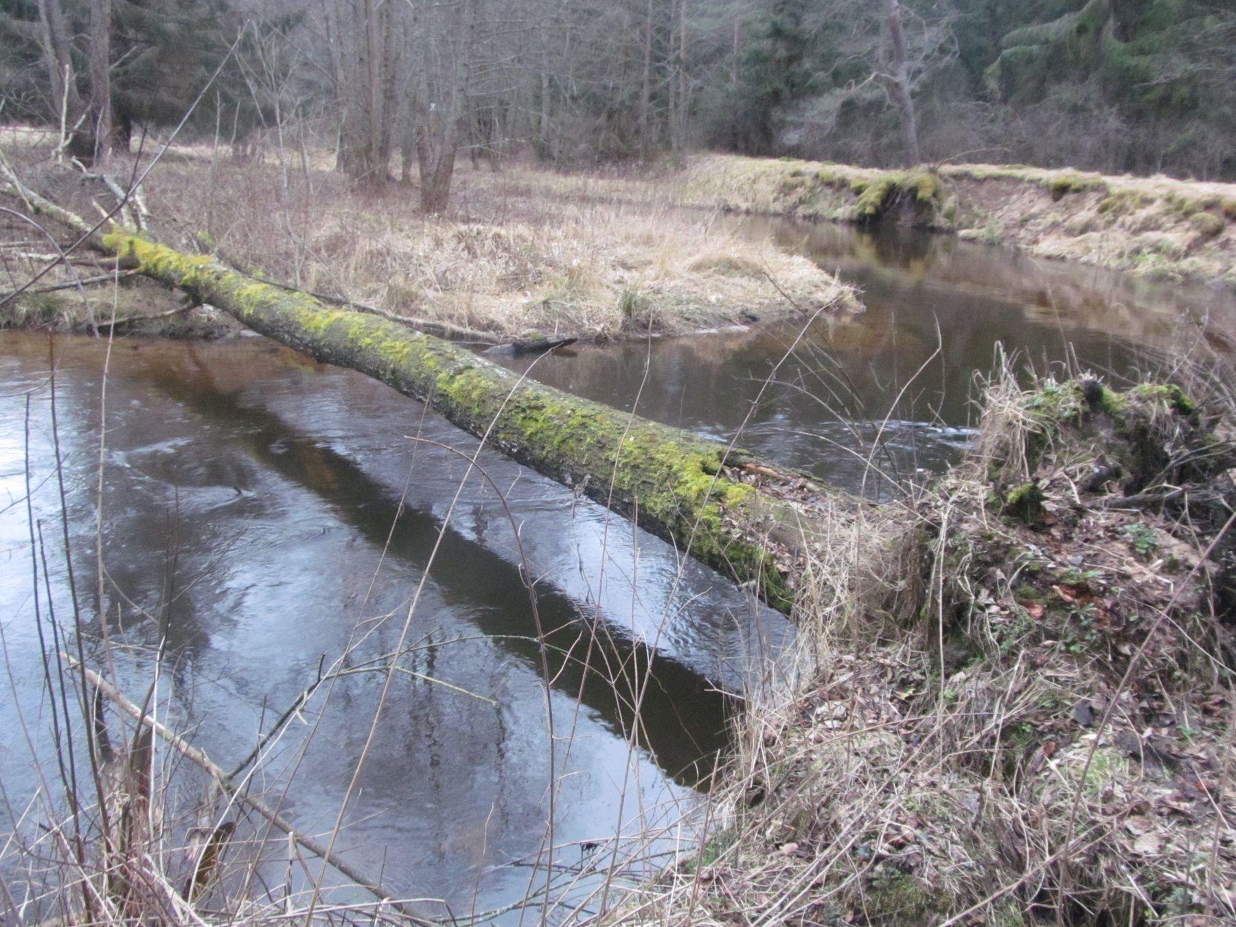 природа создает мосты река.осень.природа.мост.дерево
