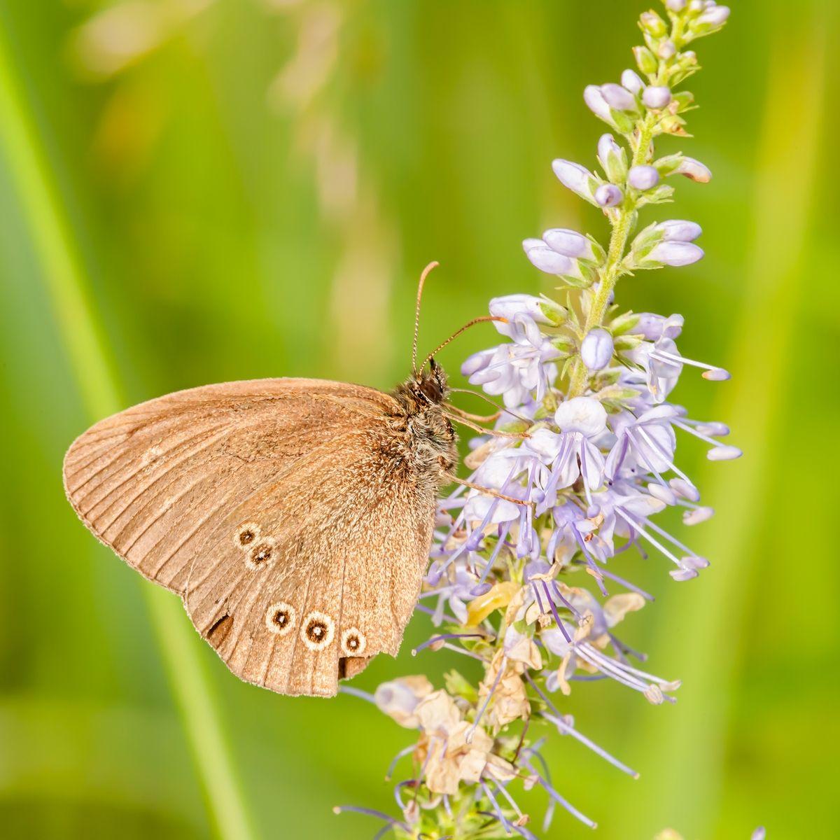 Бабочка Макро бабочка фото бабочки