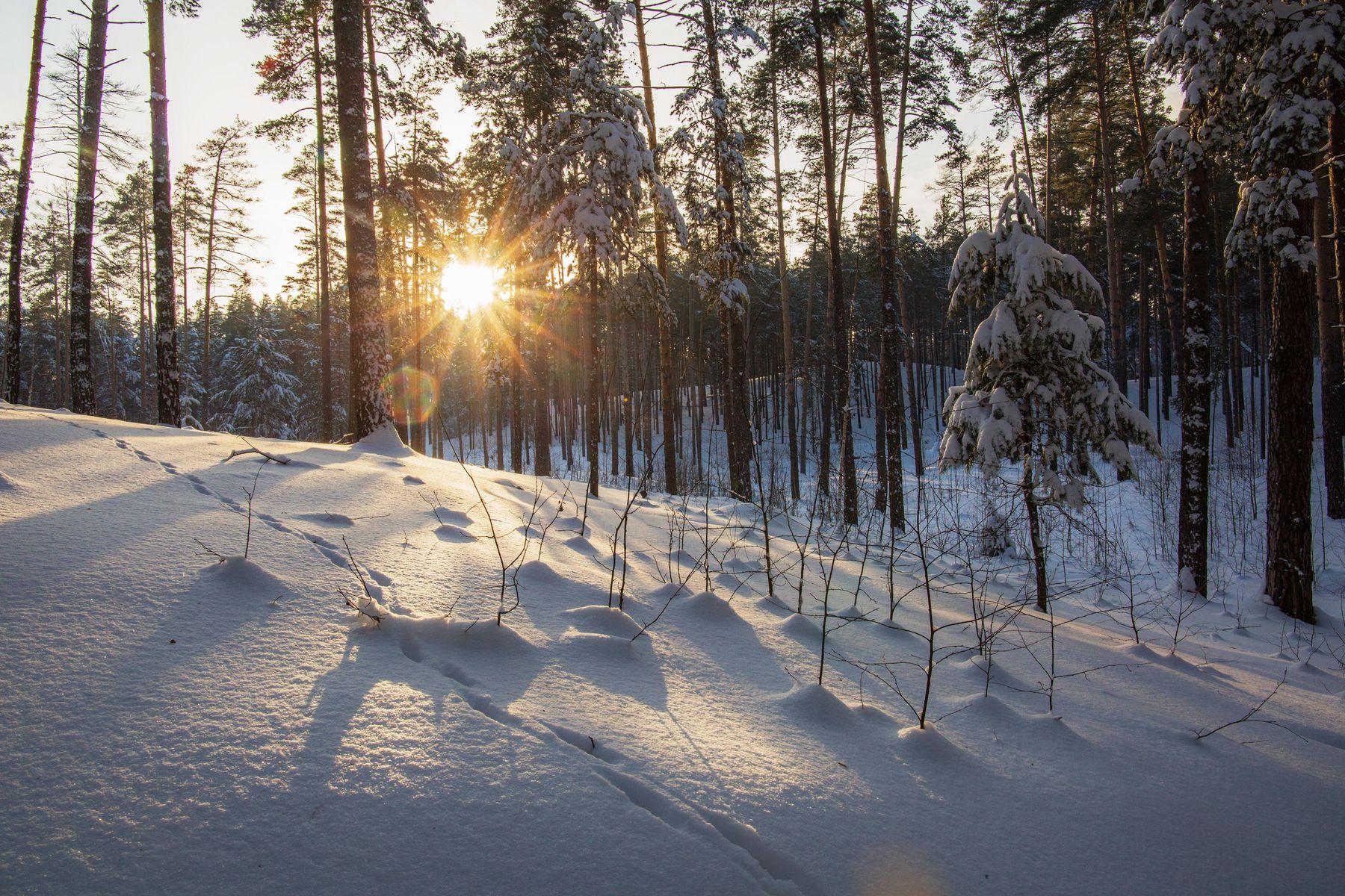 *** природа пейзаж зима.лес лесопарк лебяжье татарстан