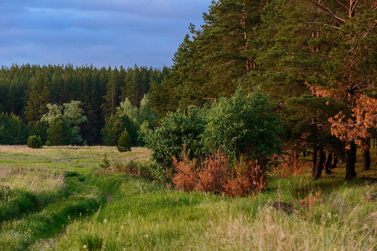 Дорога... Лето дорога лес