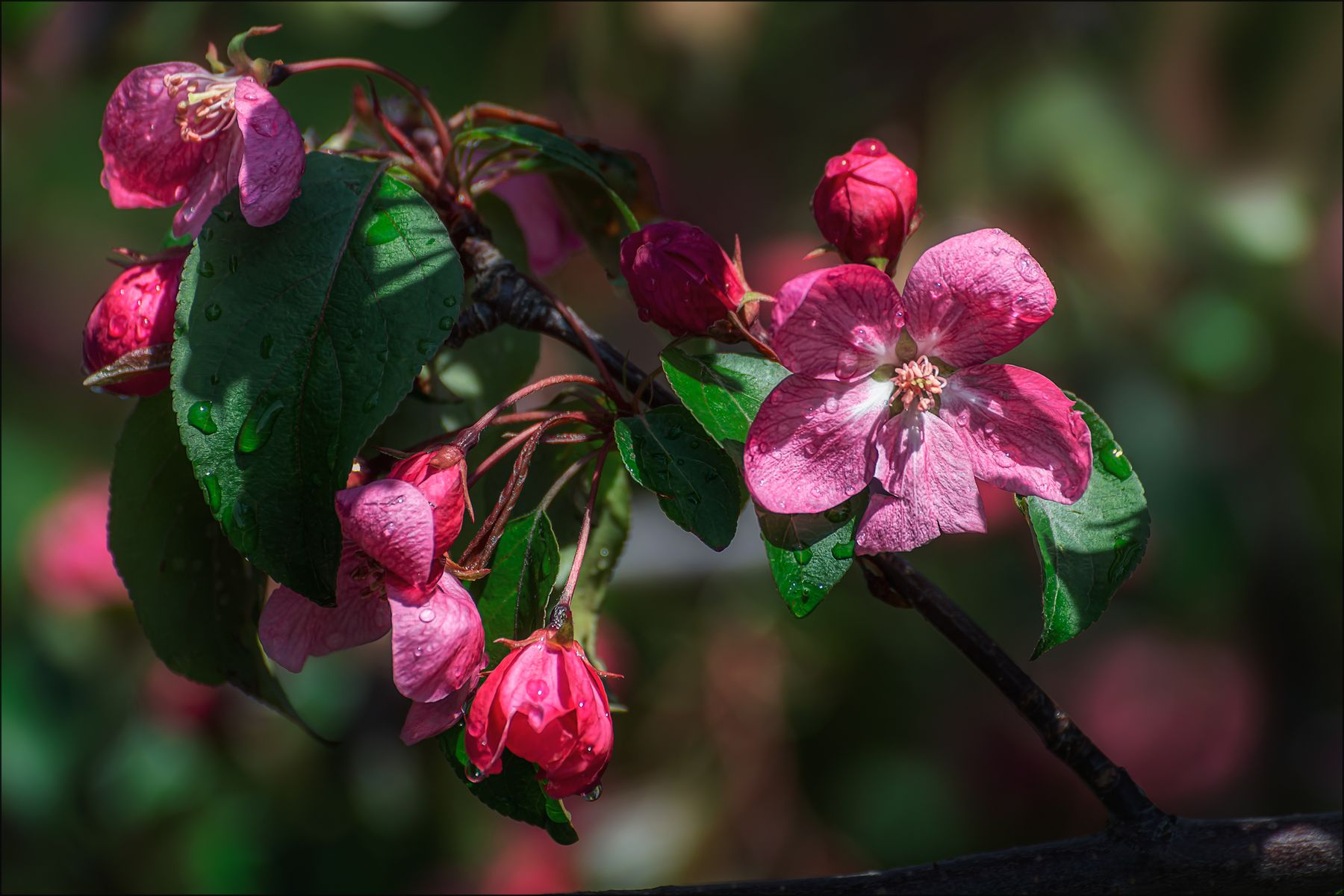 Цветение. весна цветы макро