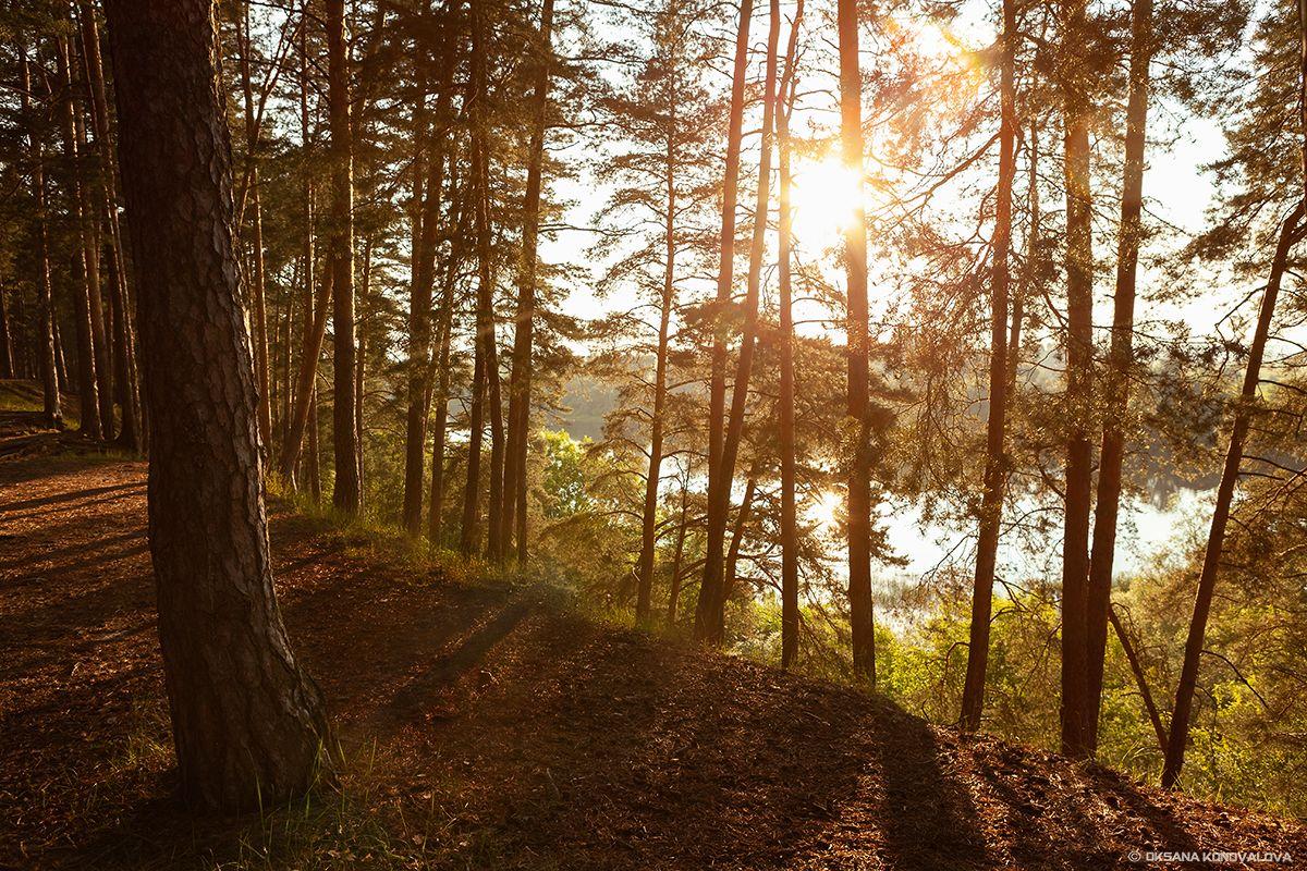 ***Солнечный вечер. лето солнце лес деревья река