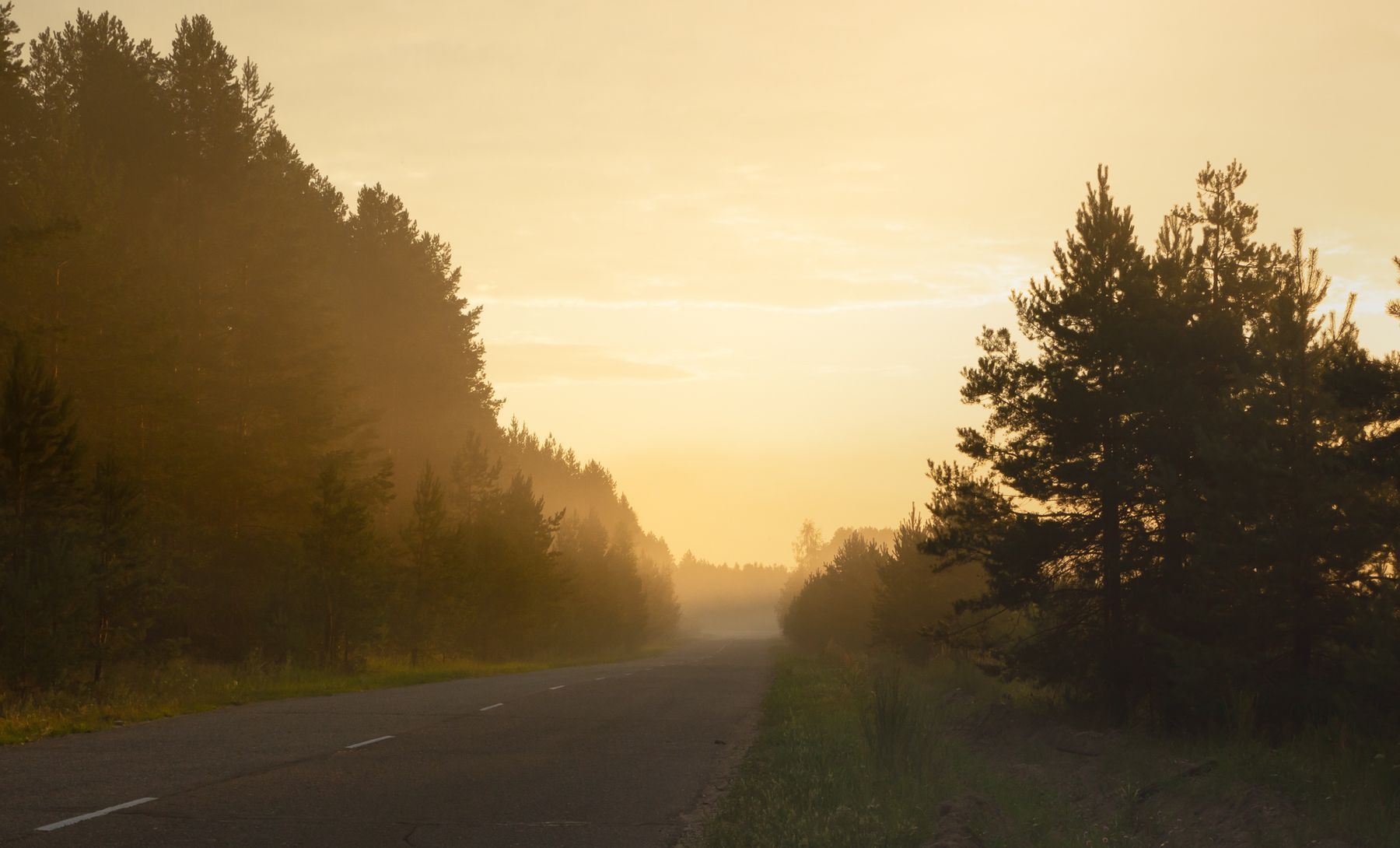 По дороге лето дорога рассвет туман
